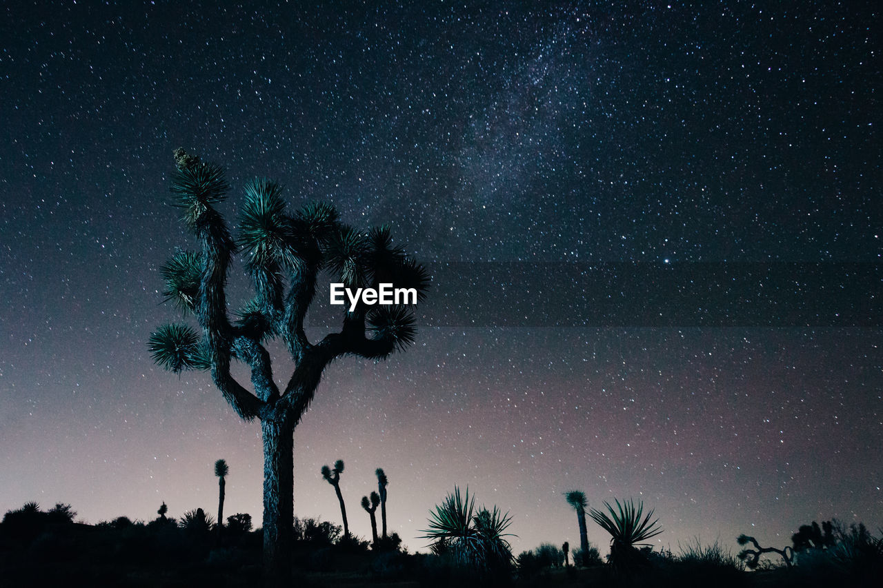 tree, palm tree, night, star - space, low angle view, beauty in nature, tree trunk, silhouette, tranquility, scenics, sky, nature, tranquil scene, outdoors, astronomy, growth, no people, galaxy