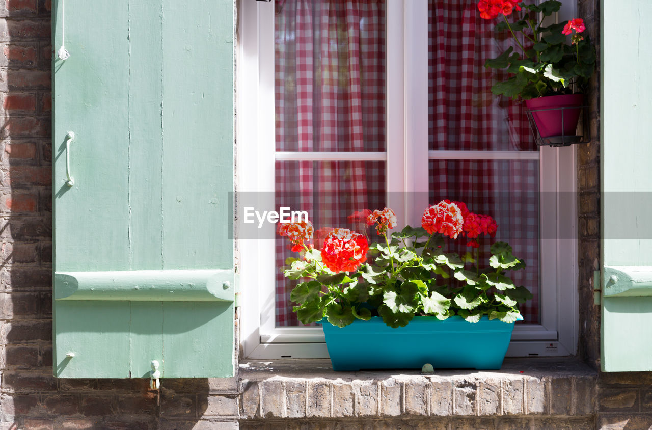 Flower pots on building window sill during sunny day