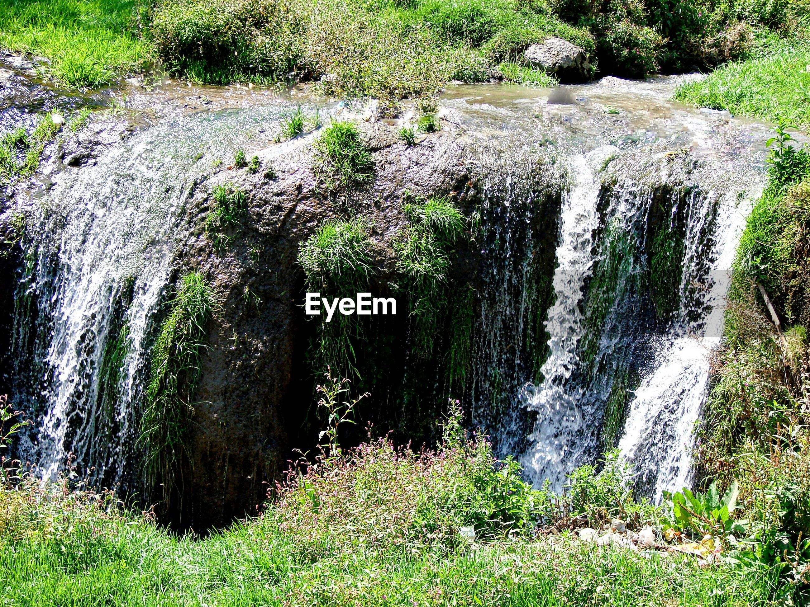 grass, green color, waterfall, nature, beauty in nature, growth, plant, scenics, flowing water, rock - object, moss, tranquility, flowing, motion, water, tranquil scene, day, tree, forest, outdoors