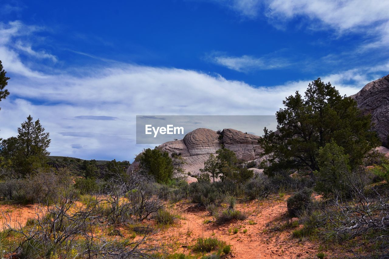 plant, sky, tree, cloud - sky, nature, beauty in nature, no people, land, tranquil scene, tranquility, environment, landscape, scenics - nature, growth, non-urban scene, day, rock formation, travel destinations, rock, rock - object, outdoors, arid climate
