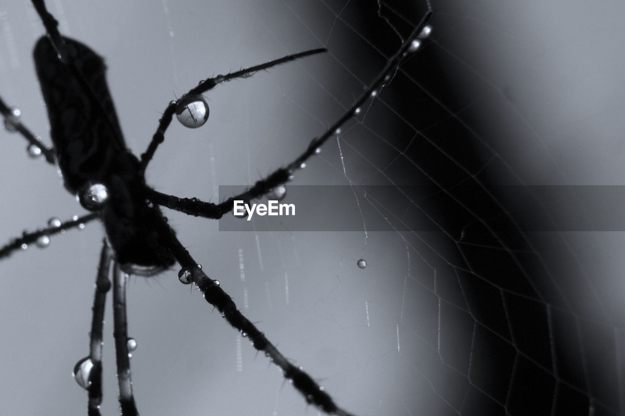 drop, spider web, close-up, water, fragility, no people, wet, focus on foreground, nature, vulnerability, outdoors, day, spider, beauty in nature, complexity, rain, selective focus, intricacy, web, dew, raindrop, rainy season, purity