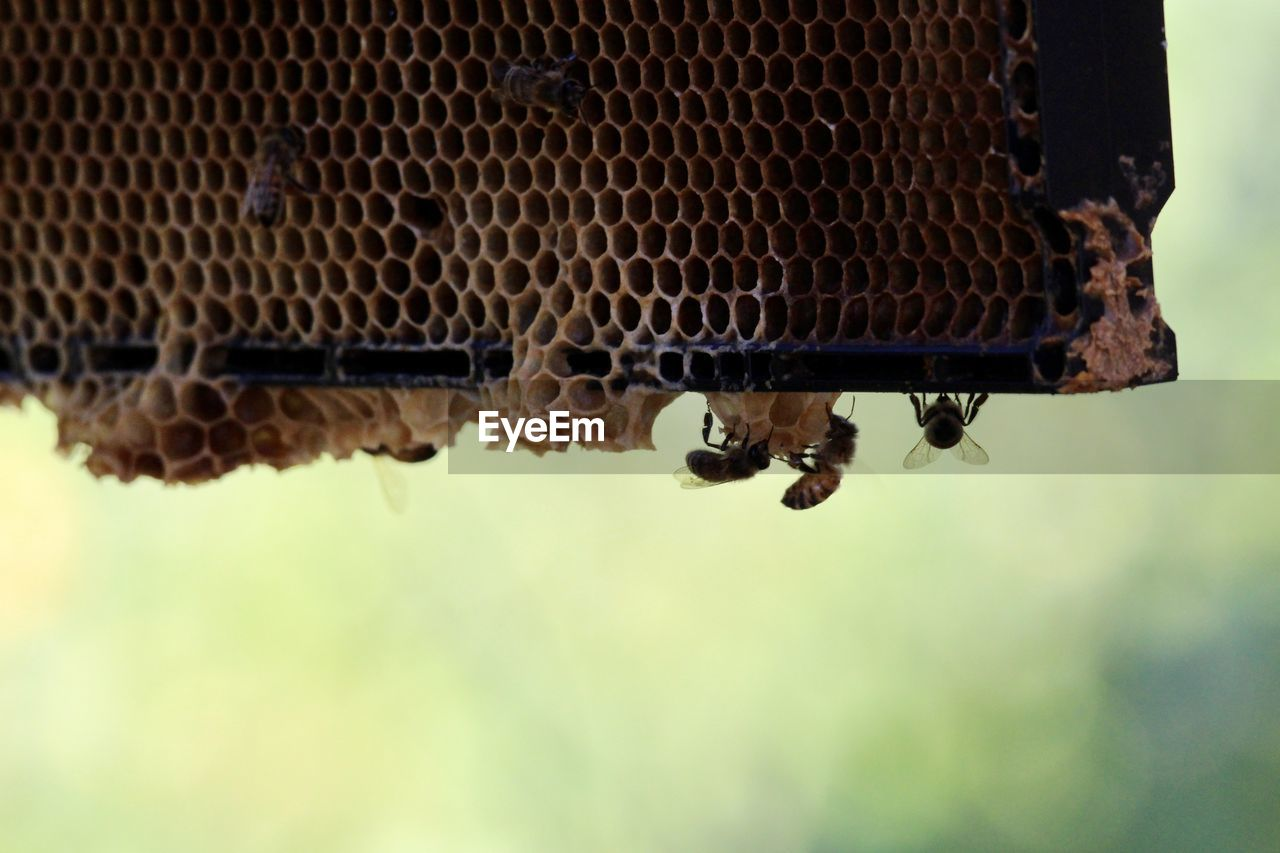 LOW ANGLE VIEW OF BEES