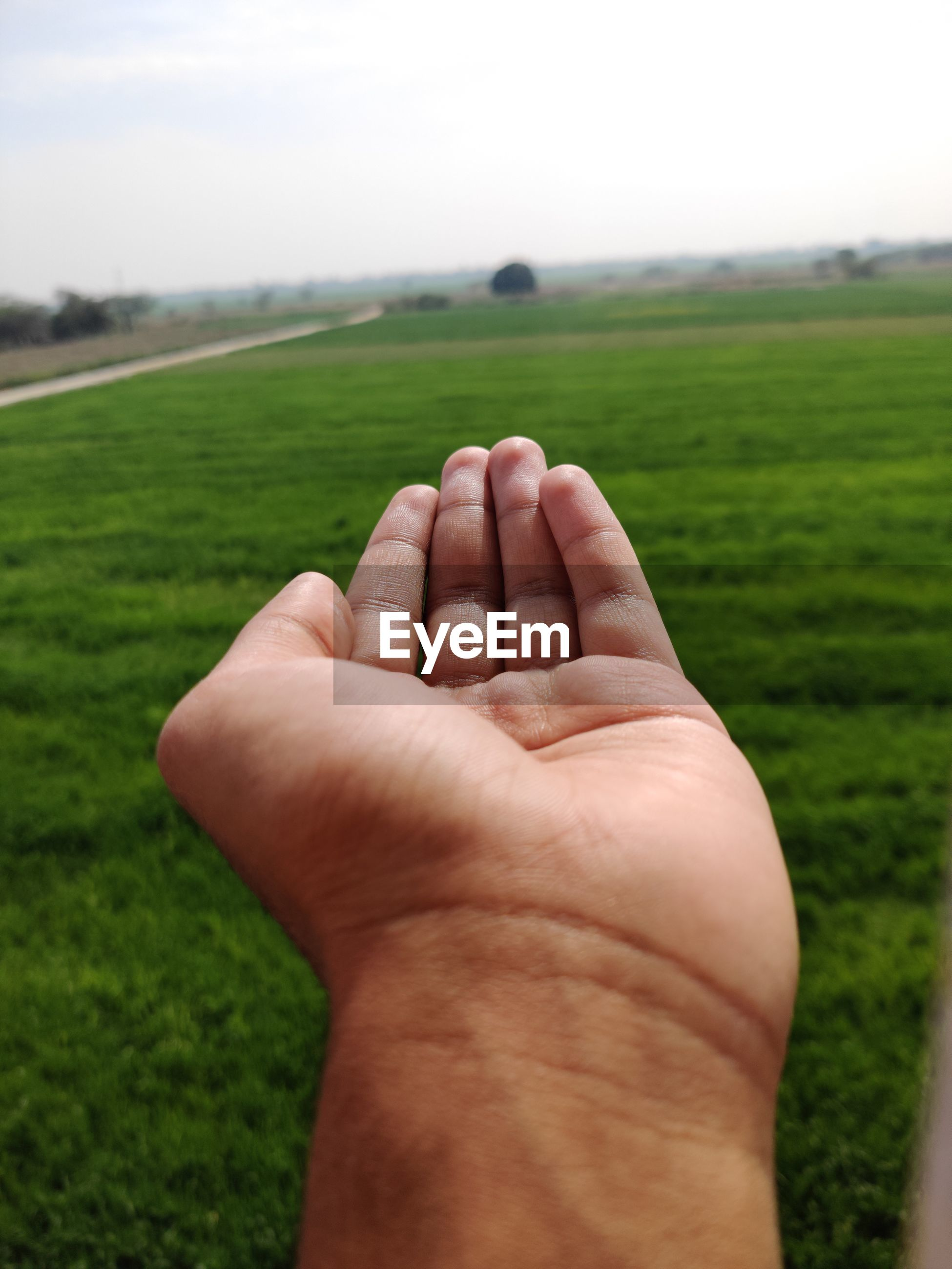 Cropped image of person hand on field