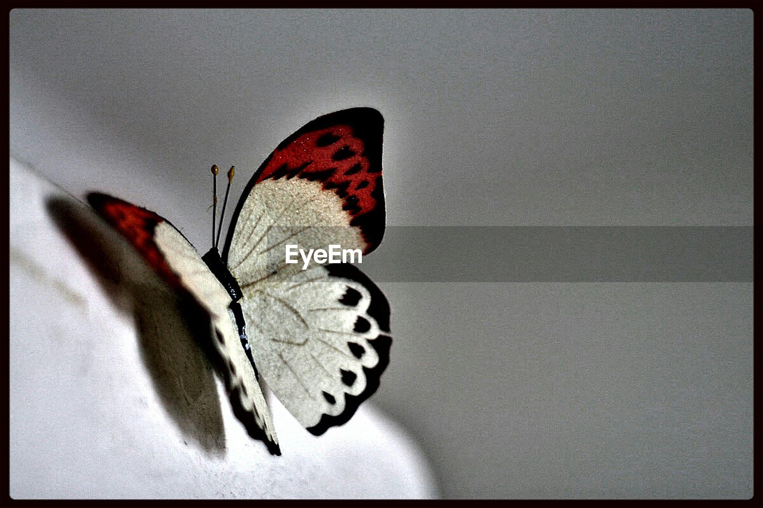 Artificial butterfly on rock