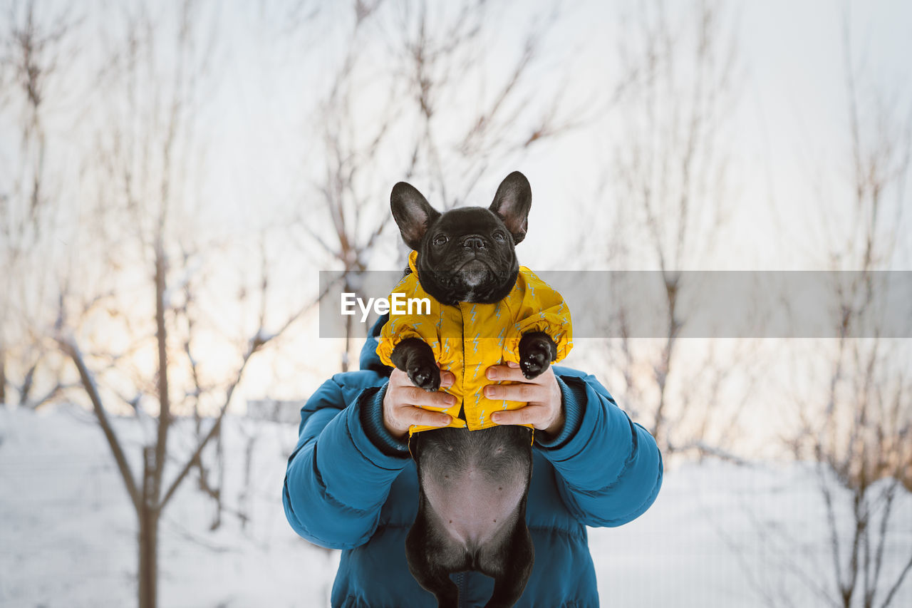one animal, mammal, animal, domestic, domestic animals, pets, animal themes, vertebrate, winter, canine, dog, cold temperature, snow, bare tree, focus on foreground, one person, real people, clothing, nature, pet owner, warm clothing, outdoors