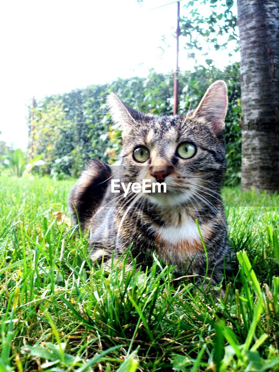 Close-Up Of Cat Sitting On Grassy Field Against Clear Sky At Park