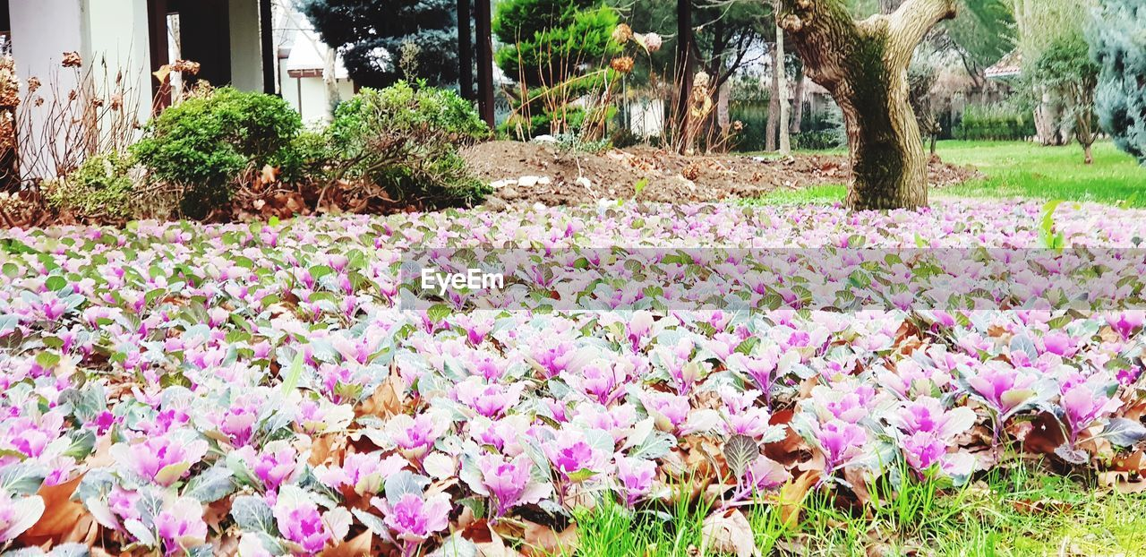 PINK FLOWERS GROWING ON FIELD