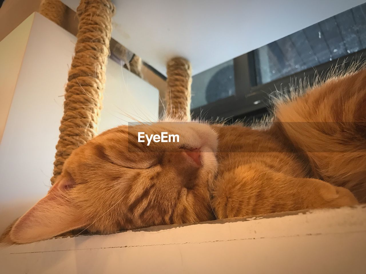 domestic cat, mammal, animal themes, one animal, indoors, feline, domestic animals, pets, relaxation, eyes closed, sleeping, home interior, no people, day, close-up, ginger cat