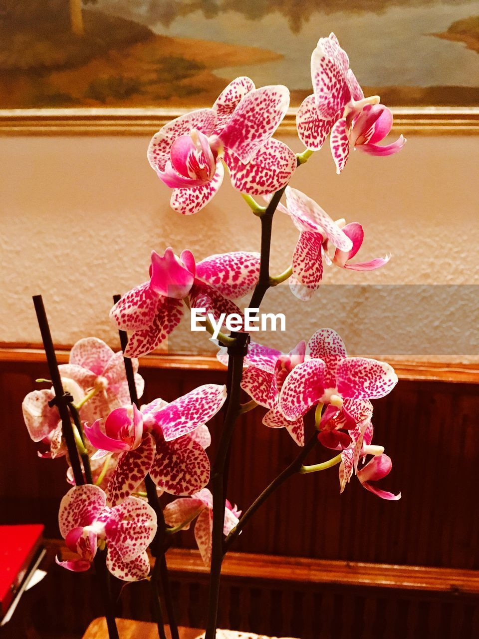 plant, flower, beauty in nature, pink color, fragility, flowering plant, vulnerability, no people, close-up, orchid, freshness, nature, inflorescence, growth, flower head, petal, decoration, focus on foreground, indoors, vase, flower arrangement, bouquet