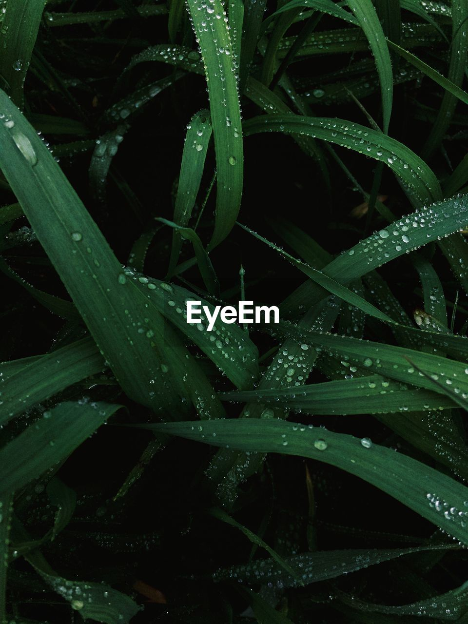 drop, green color, plant, growth, wet, leaf, nature, water, no people, aloe vera plant, raindrop, aloe, full frame, close-up, backgrounds, outdoors, freshness, beauty in nature, night, grass, fragility