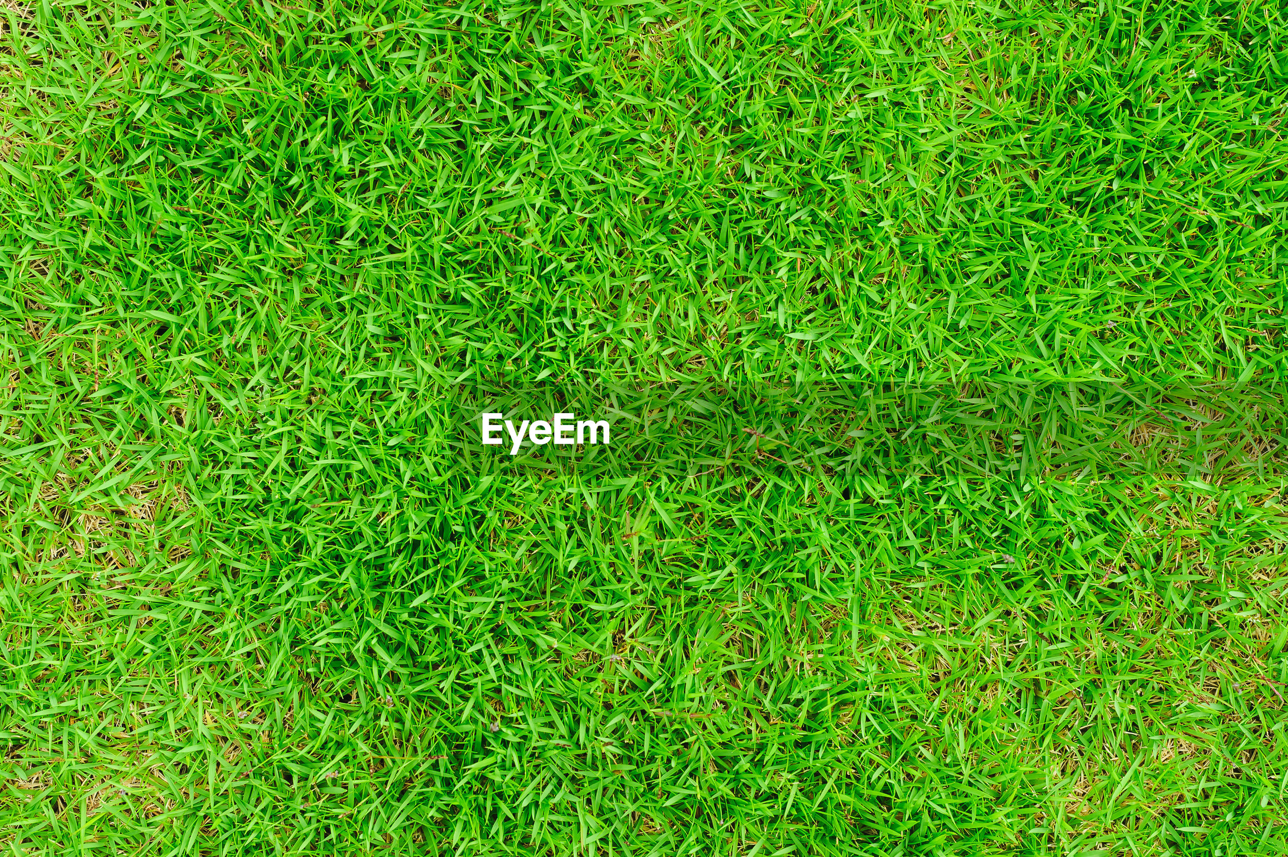 High angle view of plant on field