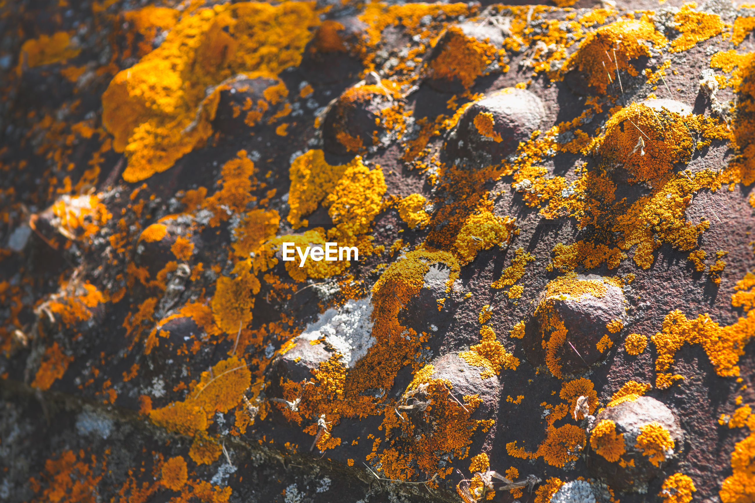 Close-up of lichen on metal