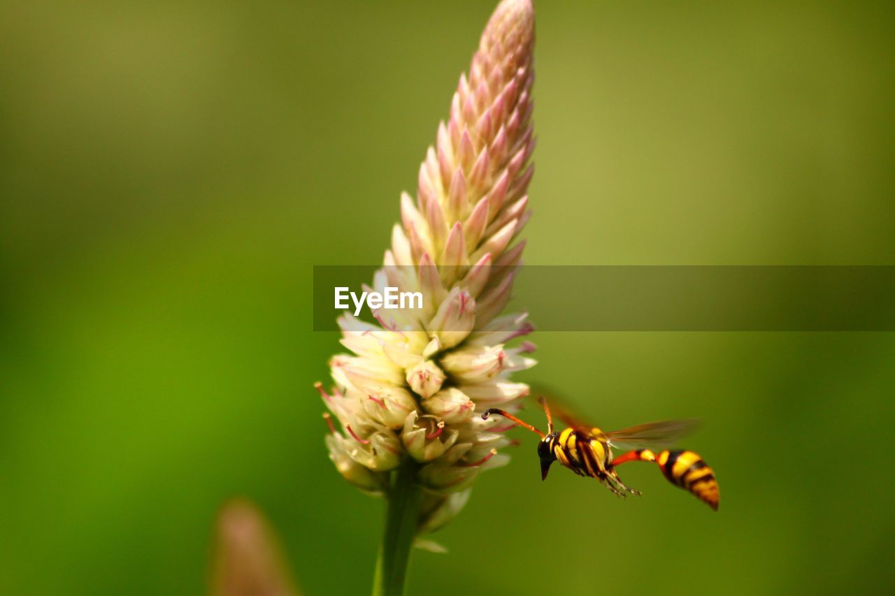 flowering plant, flower, insect, beauty in nature, invertebrate, vulnerability, fragility, animals in the wild, close-up, animal themes, plant, animal, one animal, animal wildlife, freshness, growth, petal, focus on foreground, nature, no people, flower head, pollination, outdoors, butterfly - insect