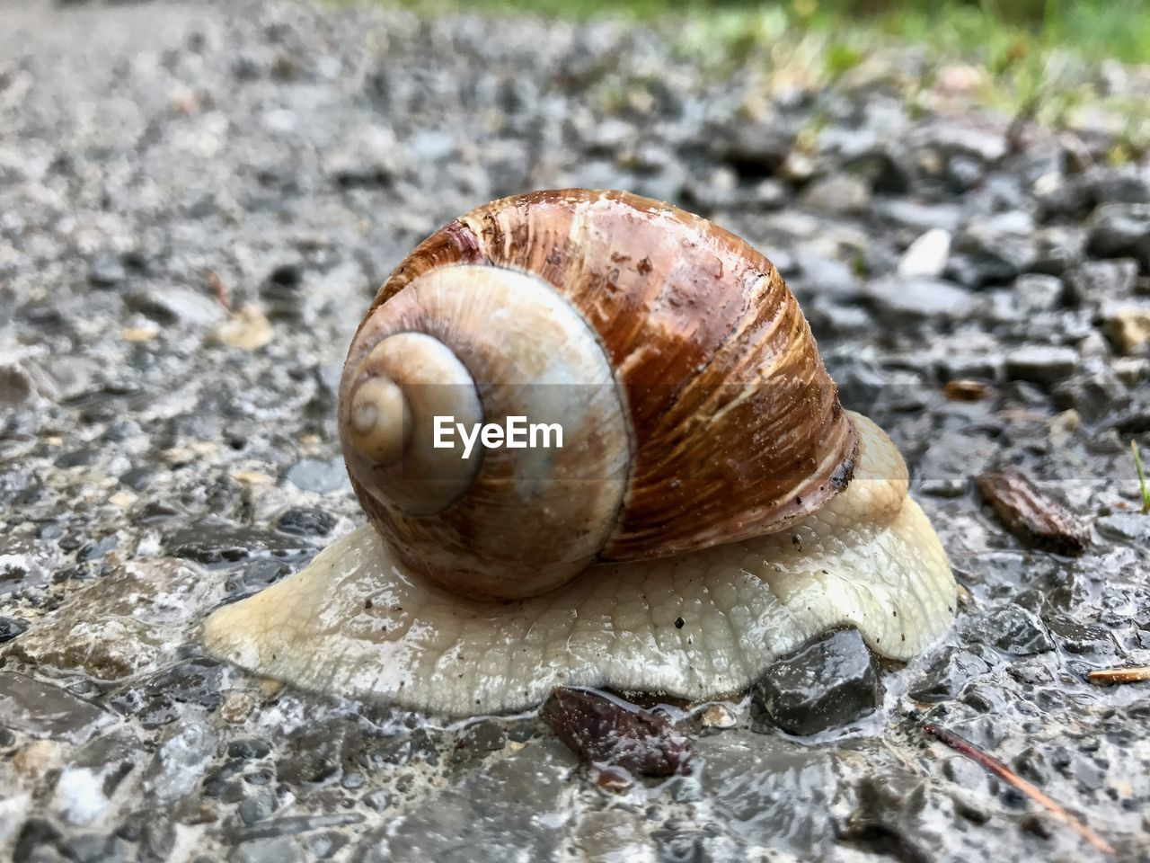 snail, gastropod, animal shell, one animal, animal themes, mollusk, wildlife, nature, close-up, fragility, animals in the wild, no people, outdoors, day