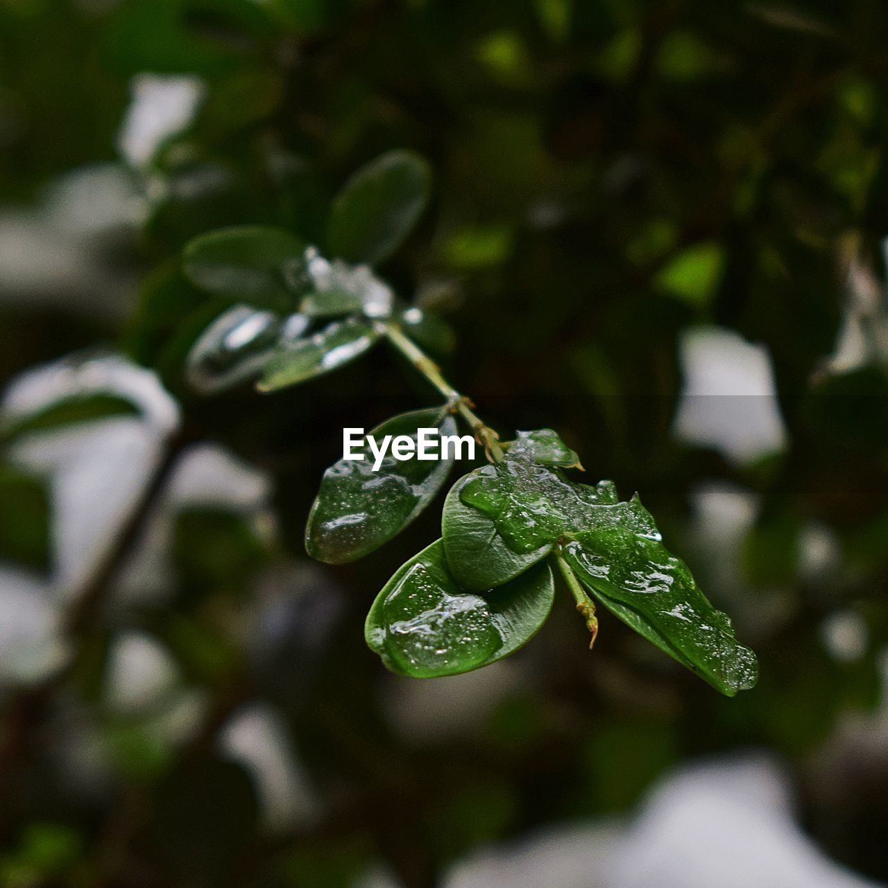 leaf, drop, green color, nature, growth, beauty in nature, water, freshness, no people, focus on foreground, wet, plant, close-up, day, raindrop, fragility, outdoors, purity