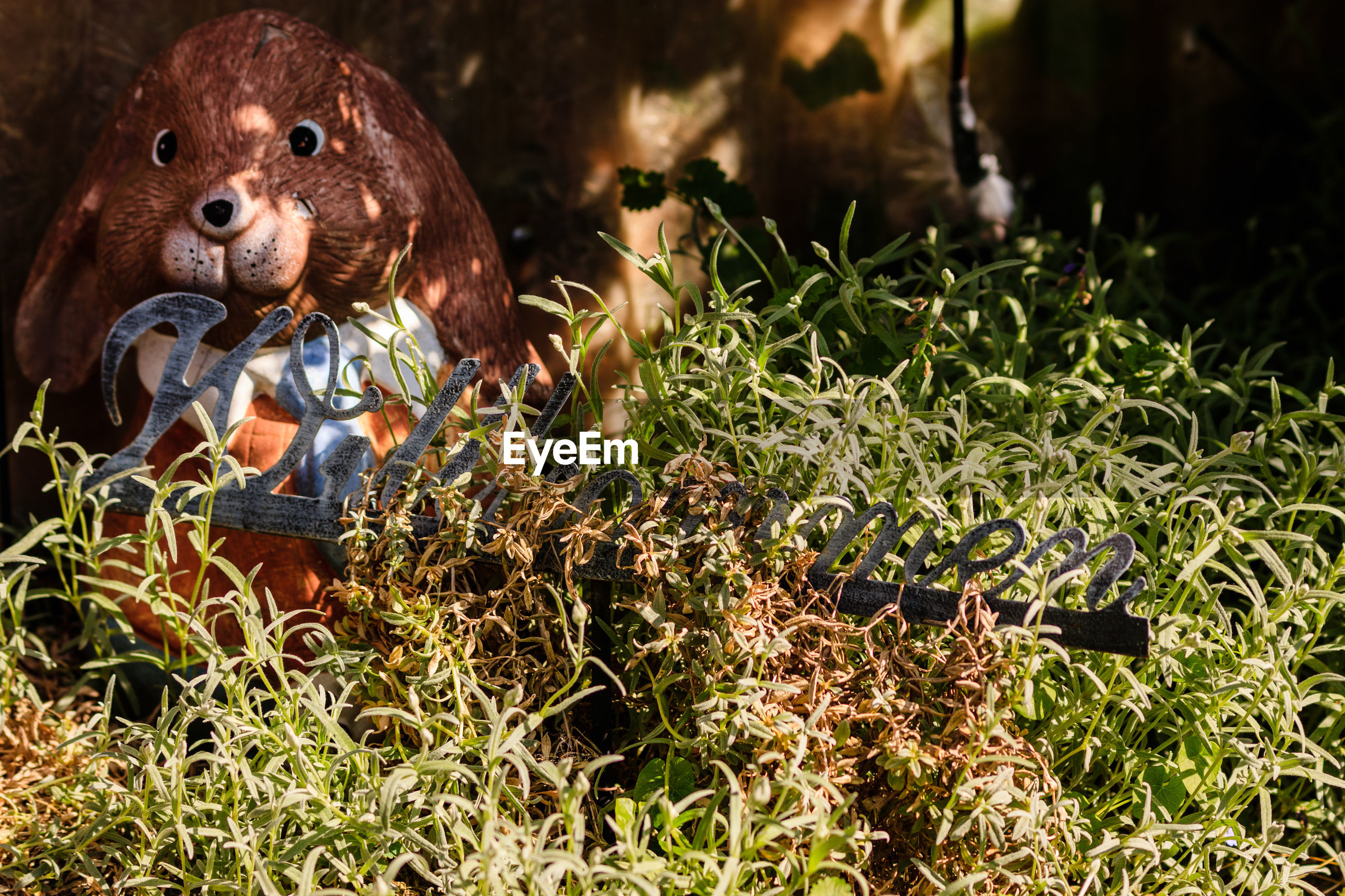 VIEW OF STUFFED TOY ON GRASS