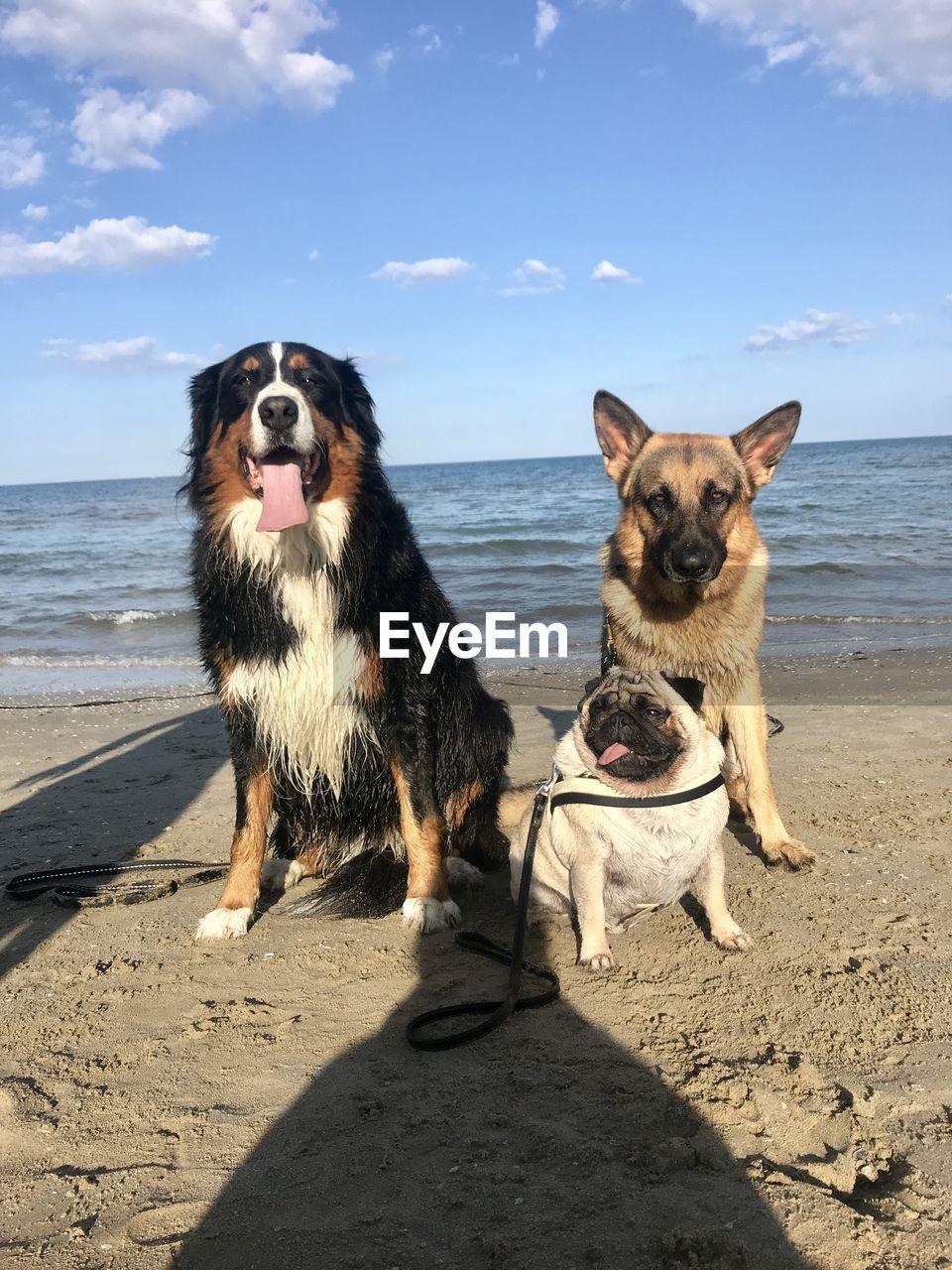 BROWN DOG ON BEACH