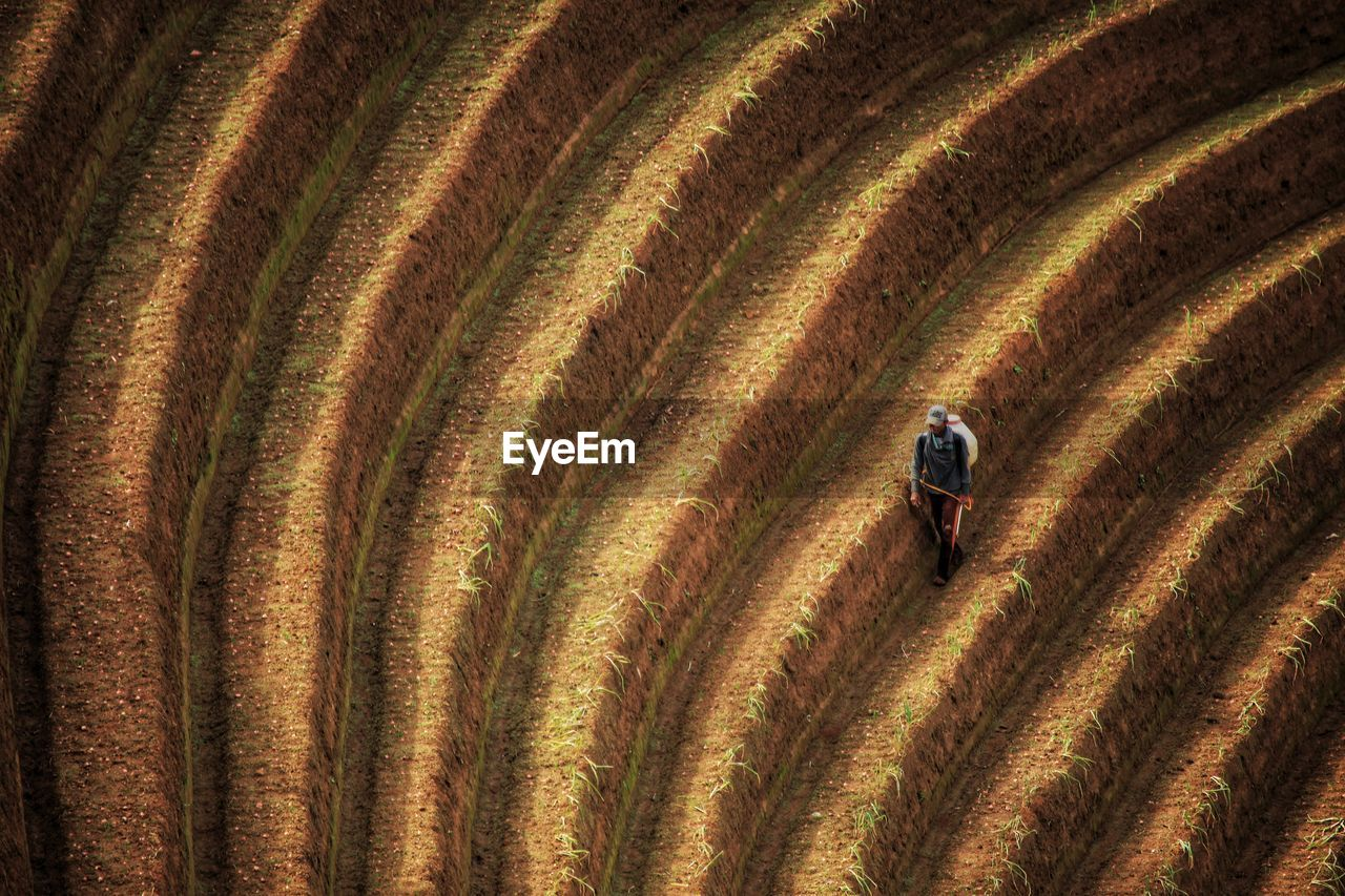 Aerial view of man on agricultural field