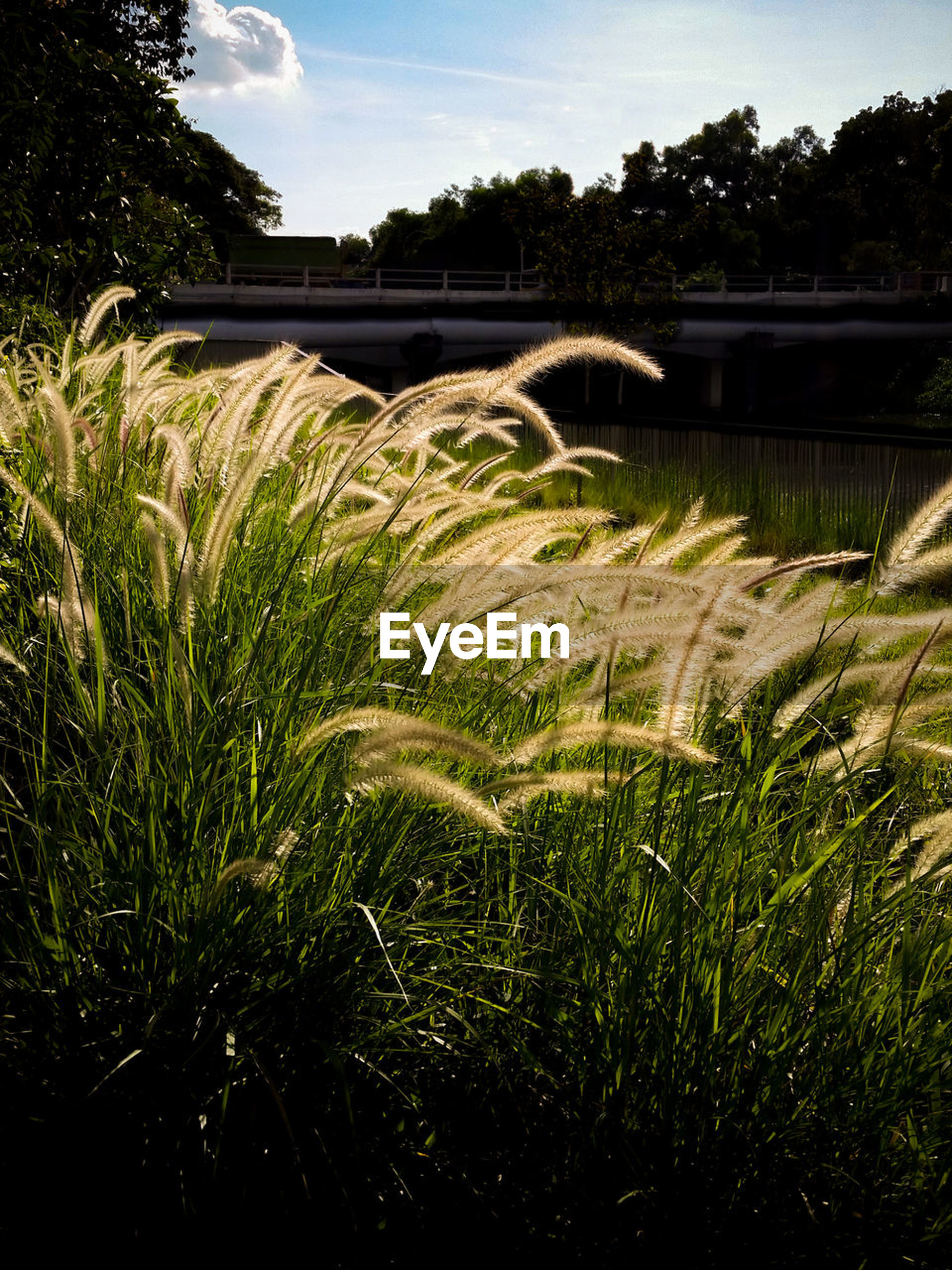 plant, growth, grass, nature, water, architecture, built structure, no people, beauty in nature, sky, green color, day, scenics - nature, outdoors, motion, cloud - sky, field, river, tree, flowing, flowing water