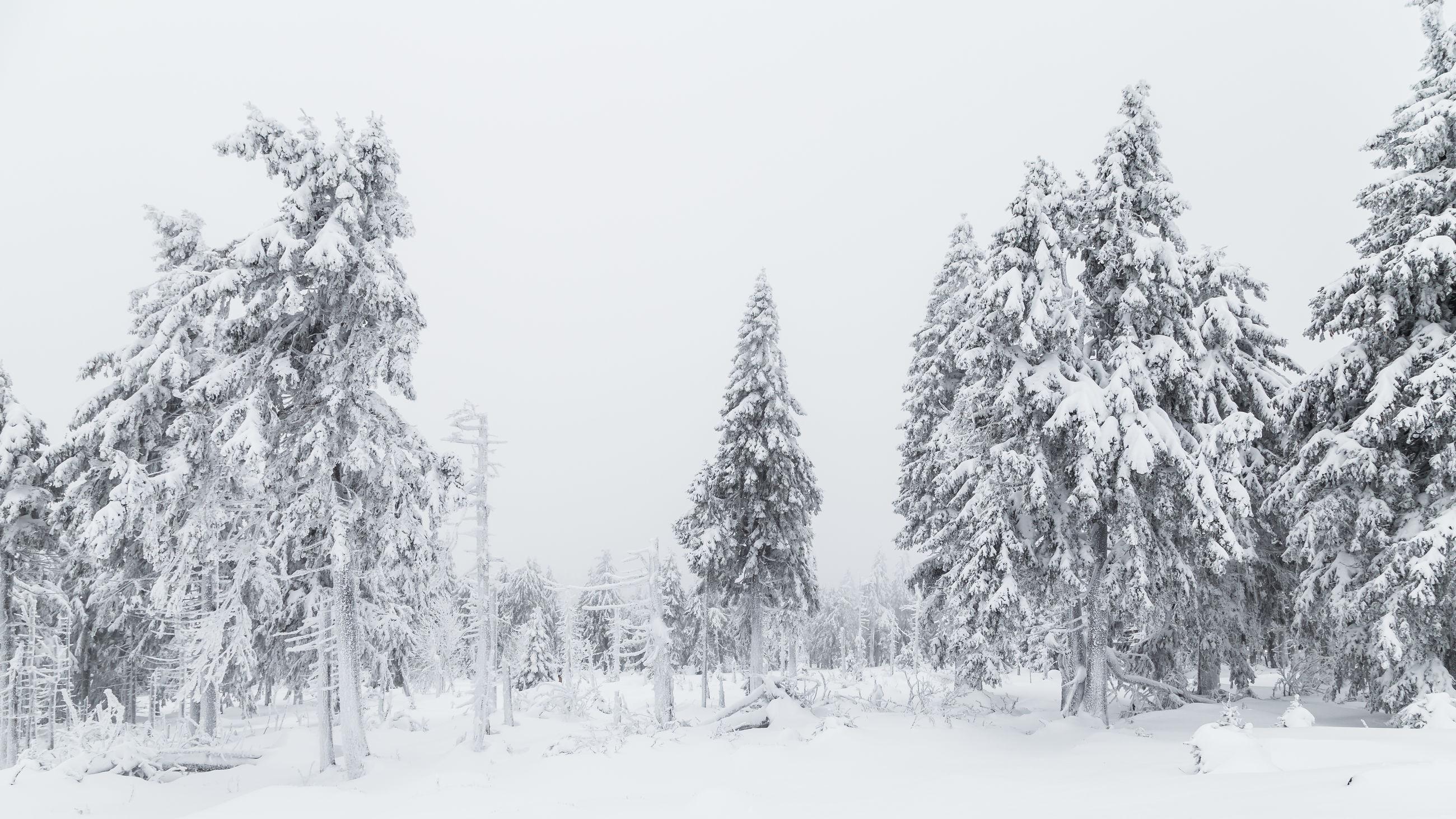 TREES ON SNOW AGAINST CLEAR SKY