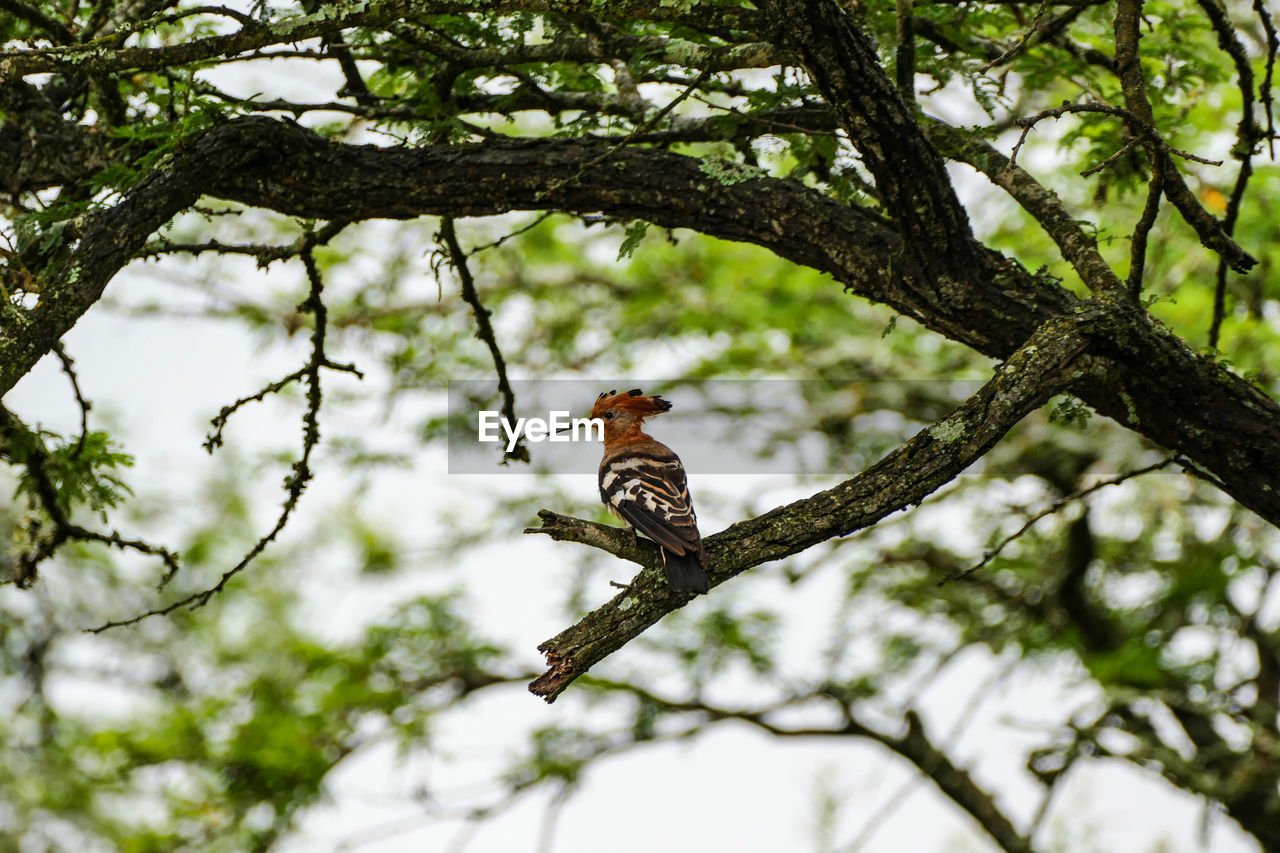 tree, animals in the wild, animal themes, bird, animal wildlife, animal, plant, vertebrate, one animal, branch, perching, low angle view, nature, day, no people, focus on foreground, woodpecker, outdoors, zoology, selective focus