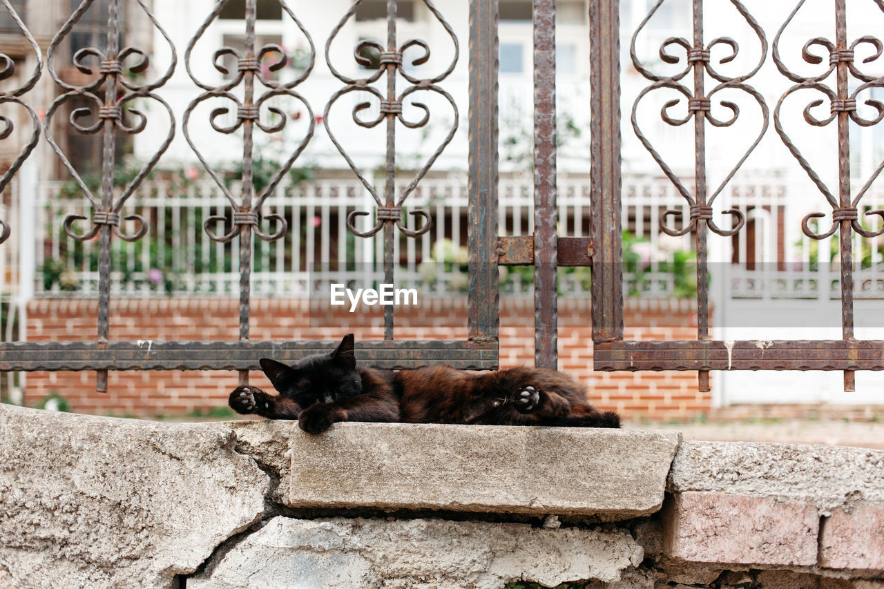 Cat Lying On Side On Concrete Wall