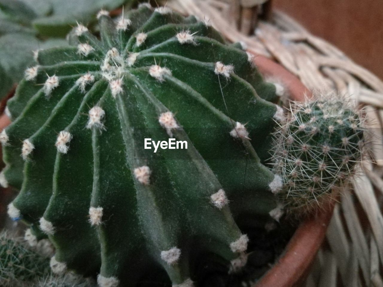 green color, plant, growth, nature, close-up, cactus, no people, thorn, focus on foreground, high angle view, spiked, day, needle - plant part, outdoors, beauty in nature, fragility