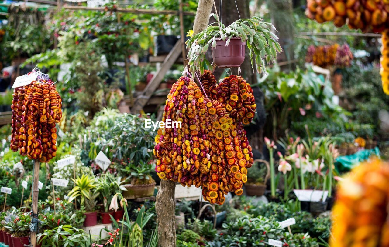 Potted plants and garlands in park