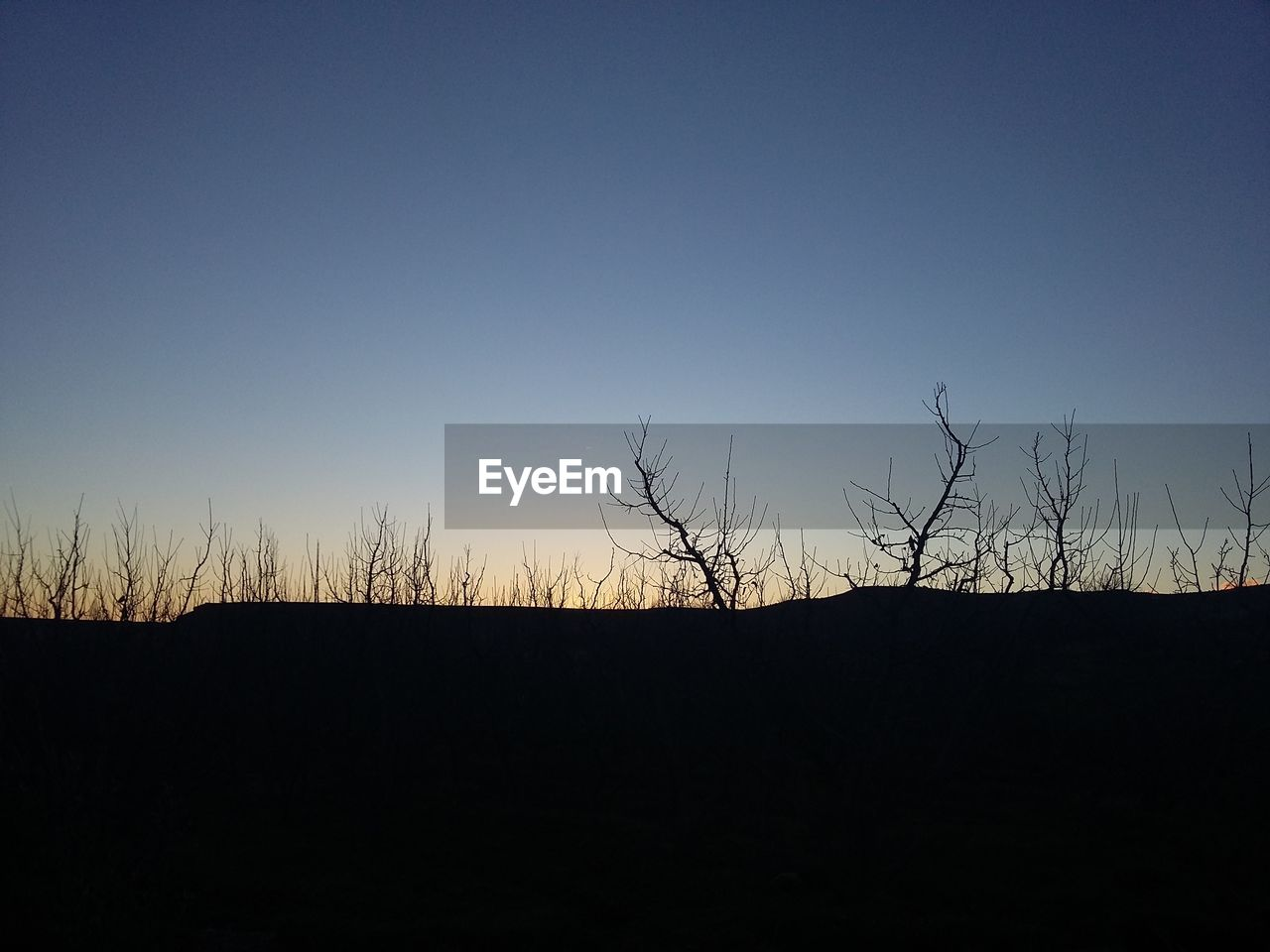 silhouette, copy space, clear sky, nature, no people, tranquility, tranquil scene, beauty in nature, scenics, outdoors, blue, landscape, sunset, sky, bare tree, tree, day