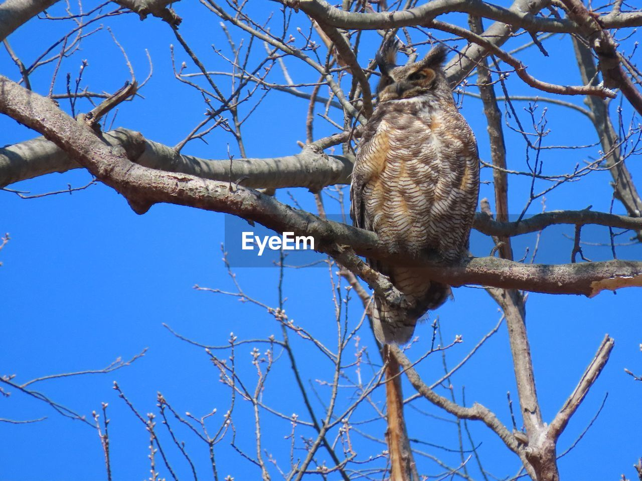 branch, low angle view, animal themes, animal, bare tree, vertebrate, animal wildlife, animals in the wild, one animal, tree, sky, plant, nature, blue, perching, day, bird, no people, clear sky, outdoors
