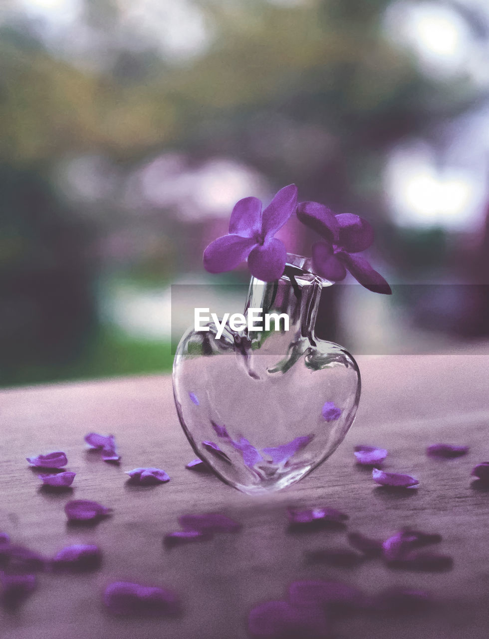 flower, flowering plant, plant, purple, close-up, glass - material, table, beauty in nature, nature, selective focus, freshness, vulnerability, no people, fragility, petal, transparent, focus on foreground, pink color, day, outdoors, flower head, glass