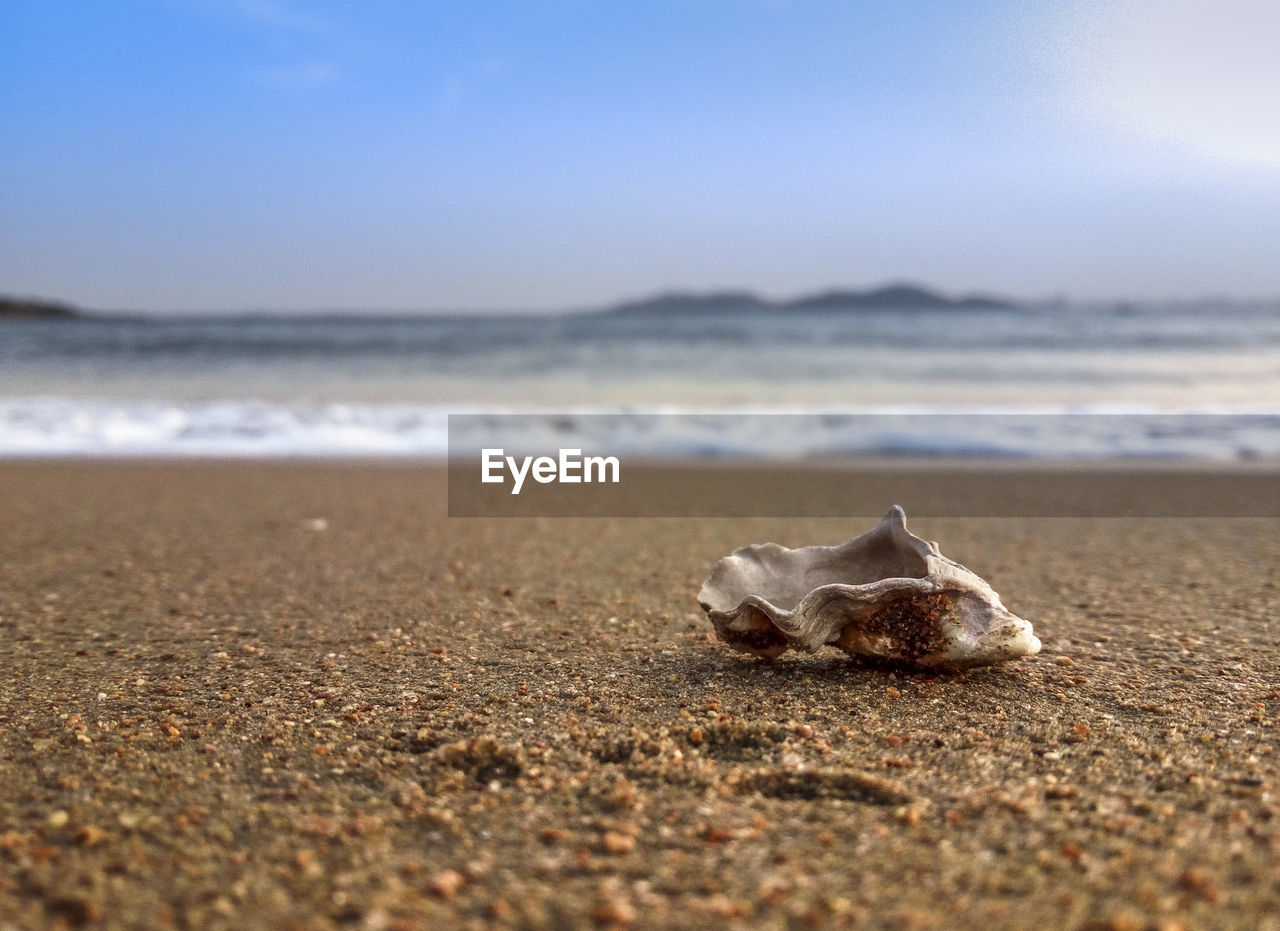 beach, sea, land, water, sky, sand, nature, animal, day, beauty in nature, no people, selective focus, shell, scenics - nature, horizon over water, motion, tranquility, wave, animal themes, surface level