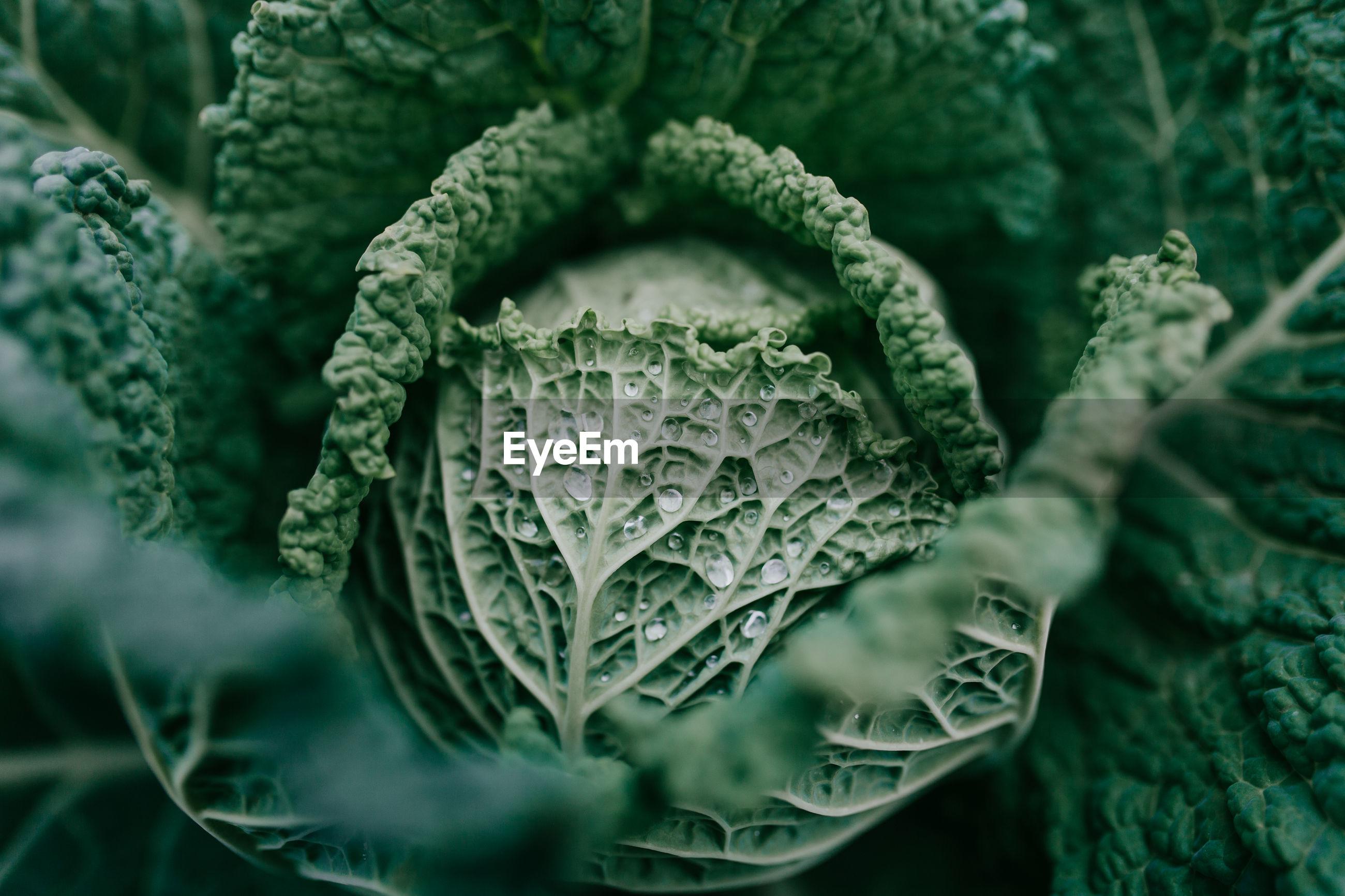 Close-up of vegetables growing in garden