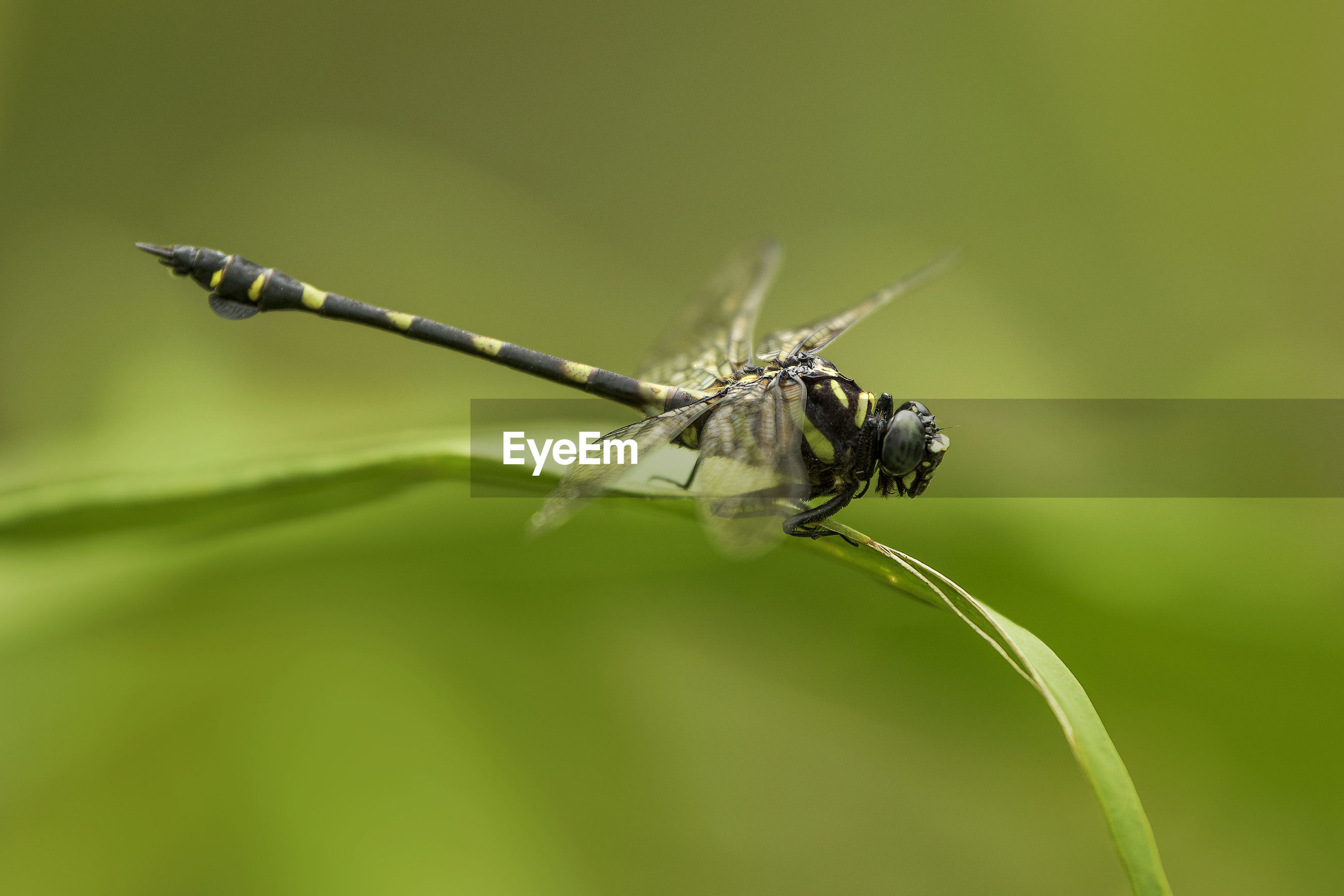 Close-up of damselfly on leaf
