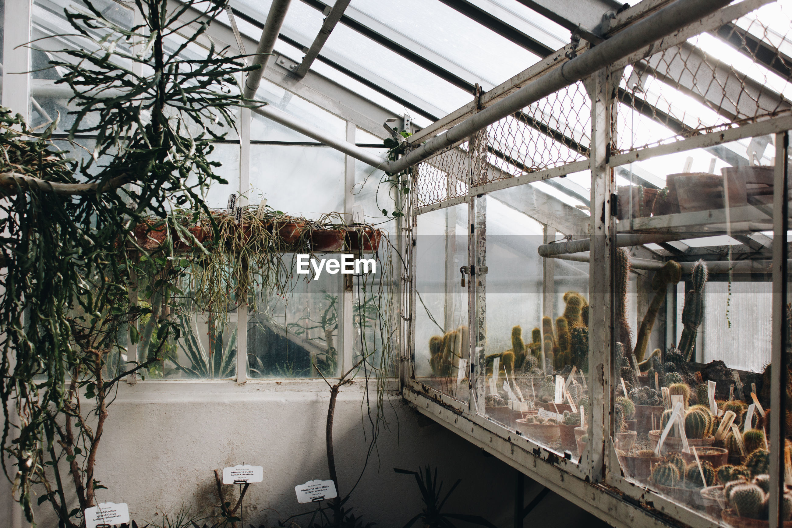 PLANTS IN GREENHOUSE