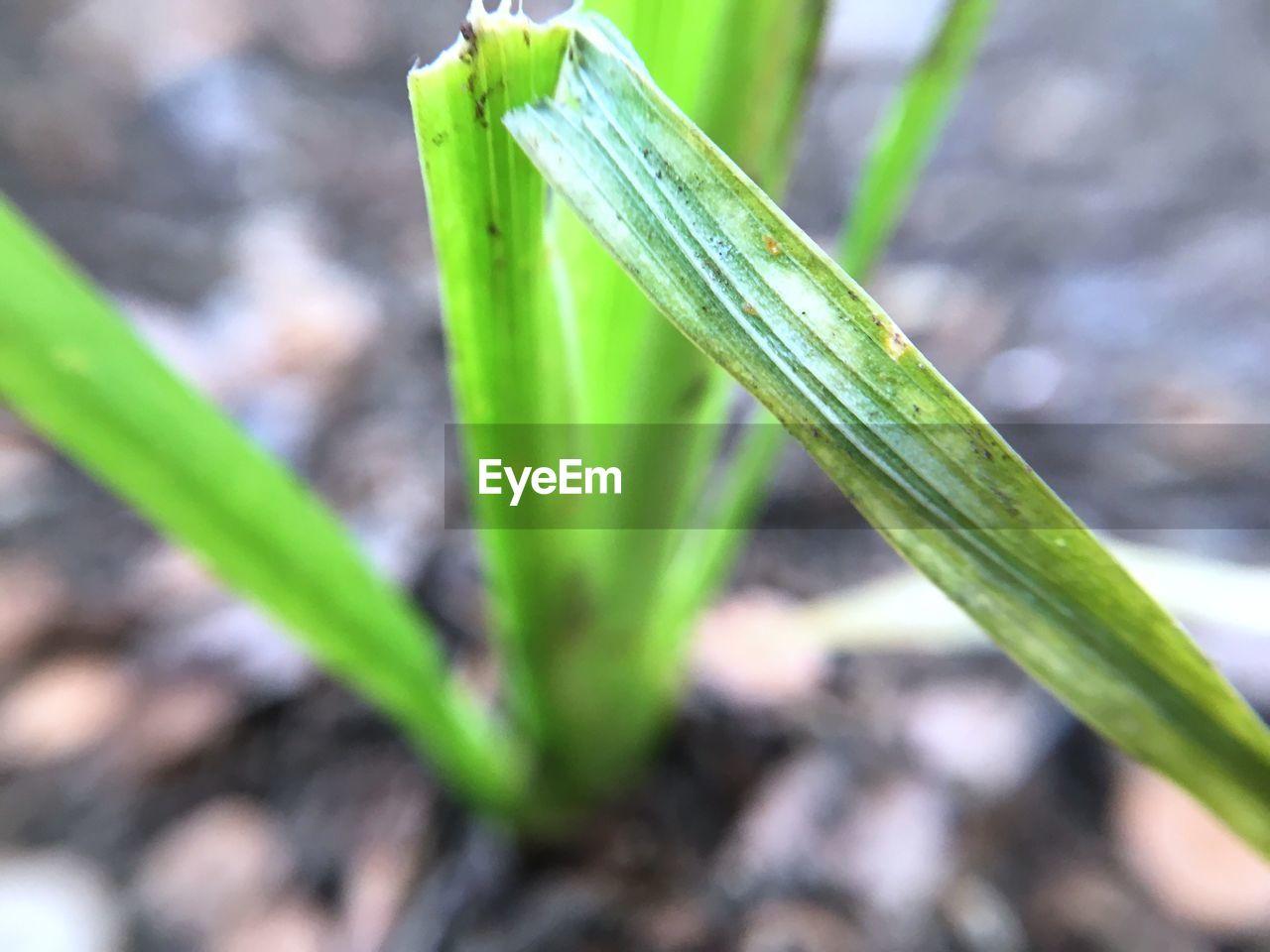Close-up of damaged grass
