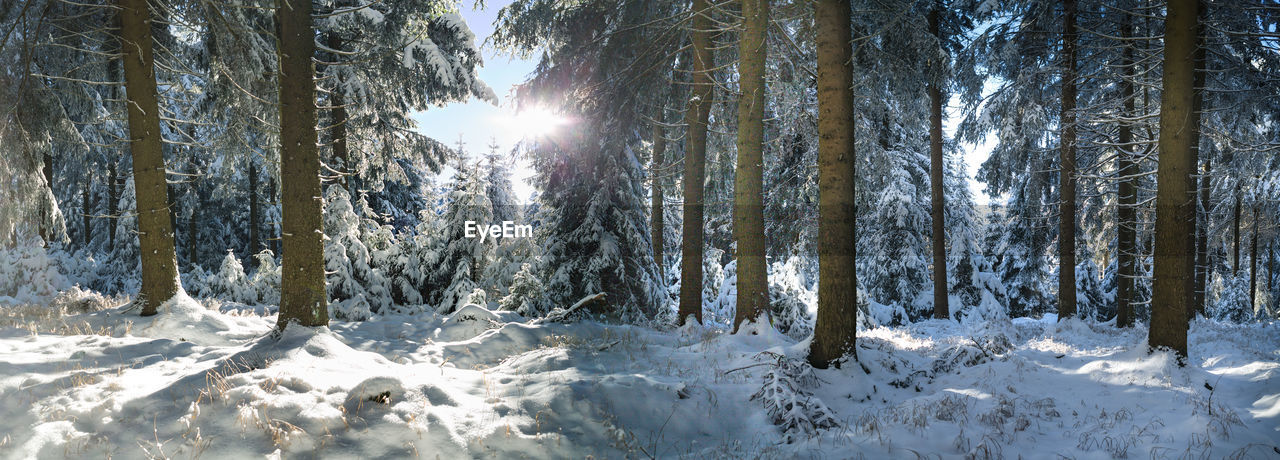 Trees On Snow Covered Land Against Bright Sun