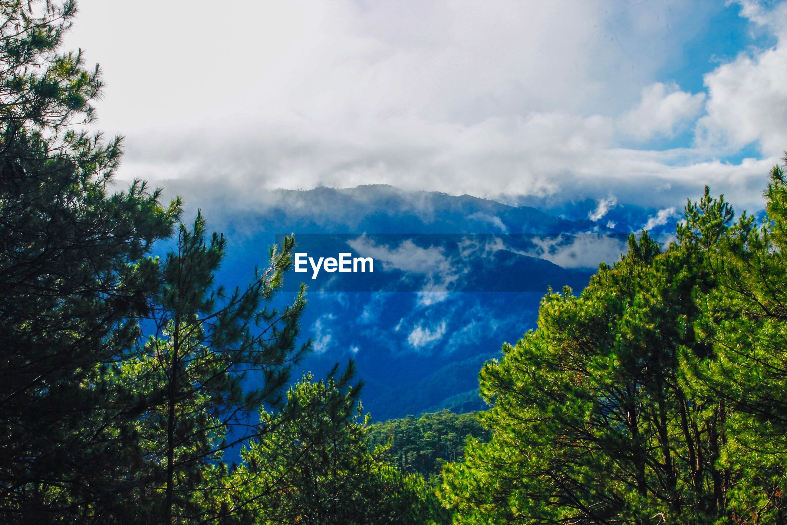 LOW ANGLE VIEW OF TREES AND MOUNTAINS AGAINST SKY