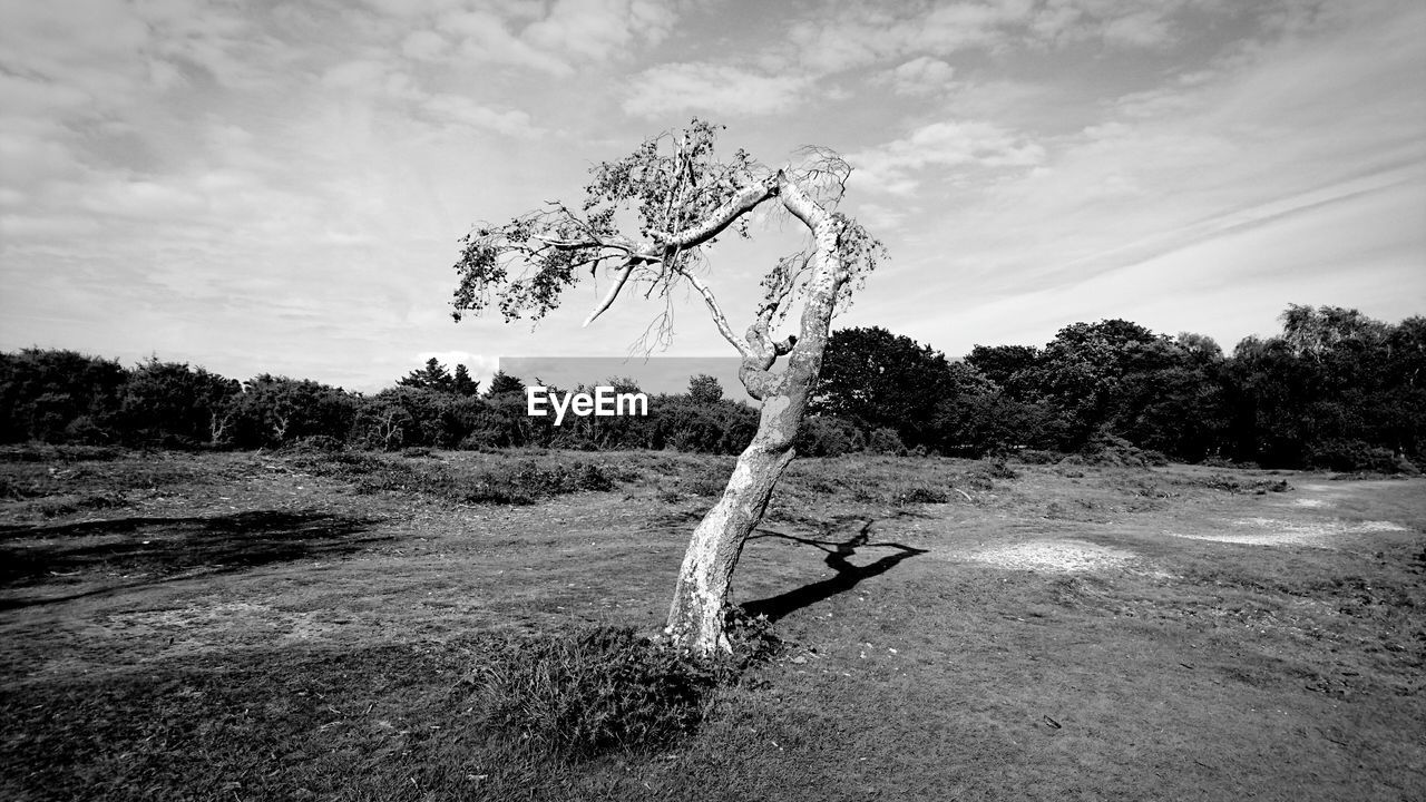 tree, plant, sky, cloud - sky, land, nature, field, tranquility, day, landscape, tranquil scene, environment, no people, beauty in nature, growth, outdoors, non-urban scene, scenics - nature, grass, water, dead plant