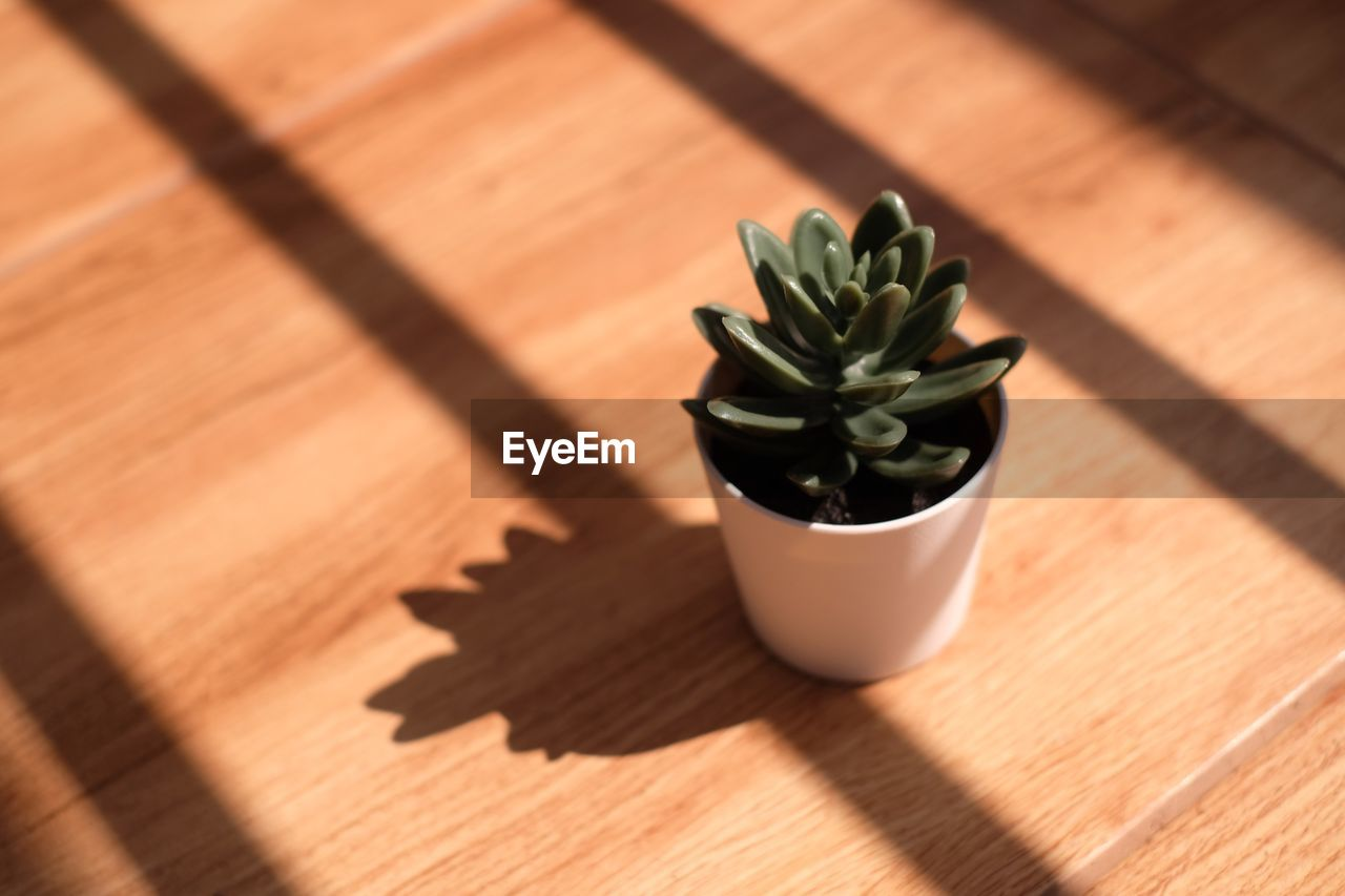 wood - material, shadow, table, sunlight, no people, succulent plant, high angle view, plant, indoors, nature, potted plant, green color, close-up, food and drink, day, still life, focus on foreground, cactus, flooring, houseplant