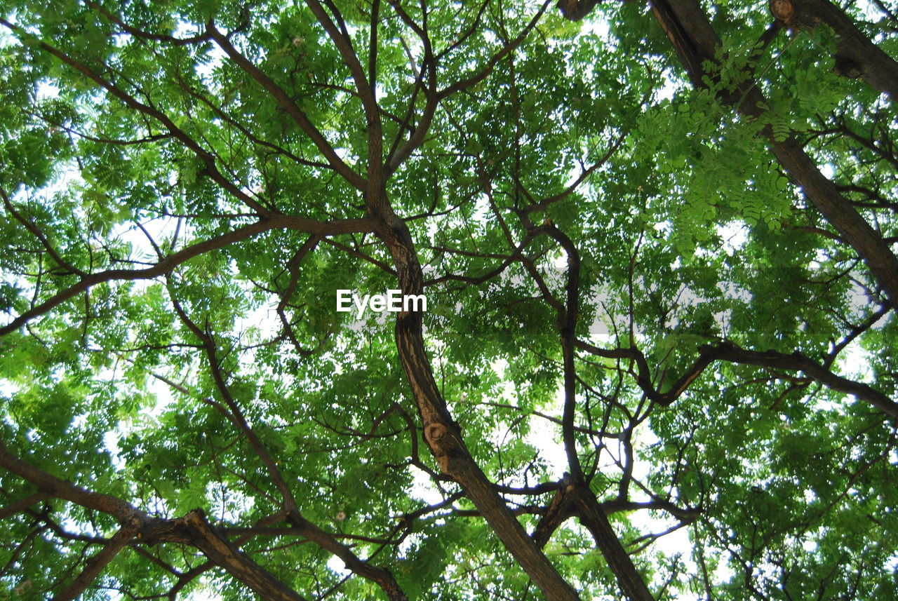 tree, nature, low angle view, branch, forest, day, beauty in nature, green color, growth, outdoors, tranquility, no people, sky