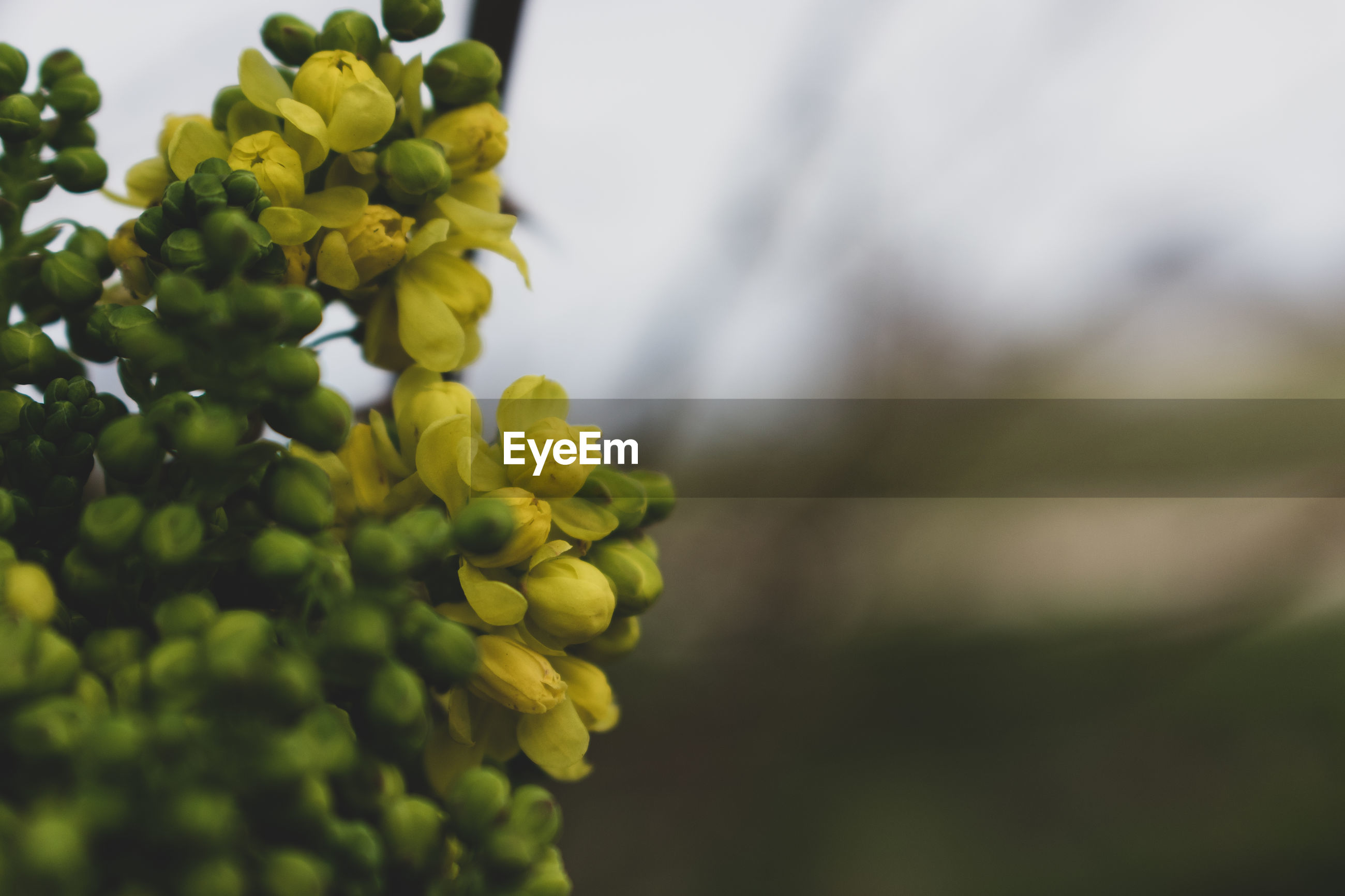 growth, plant, freshness, green color, close-up, beauty in nature, food and drink, healthy eating, no people, day, food, nature, focus on foreground, fruit, flower, selective focus, wellbeing, flowering plant, outdoors, leaf