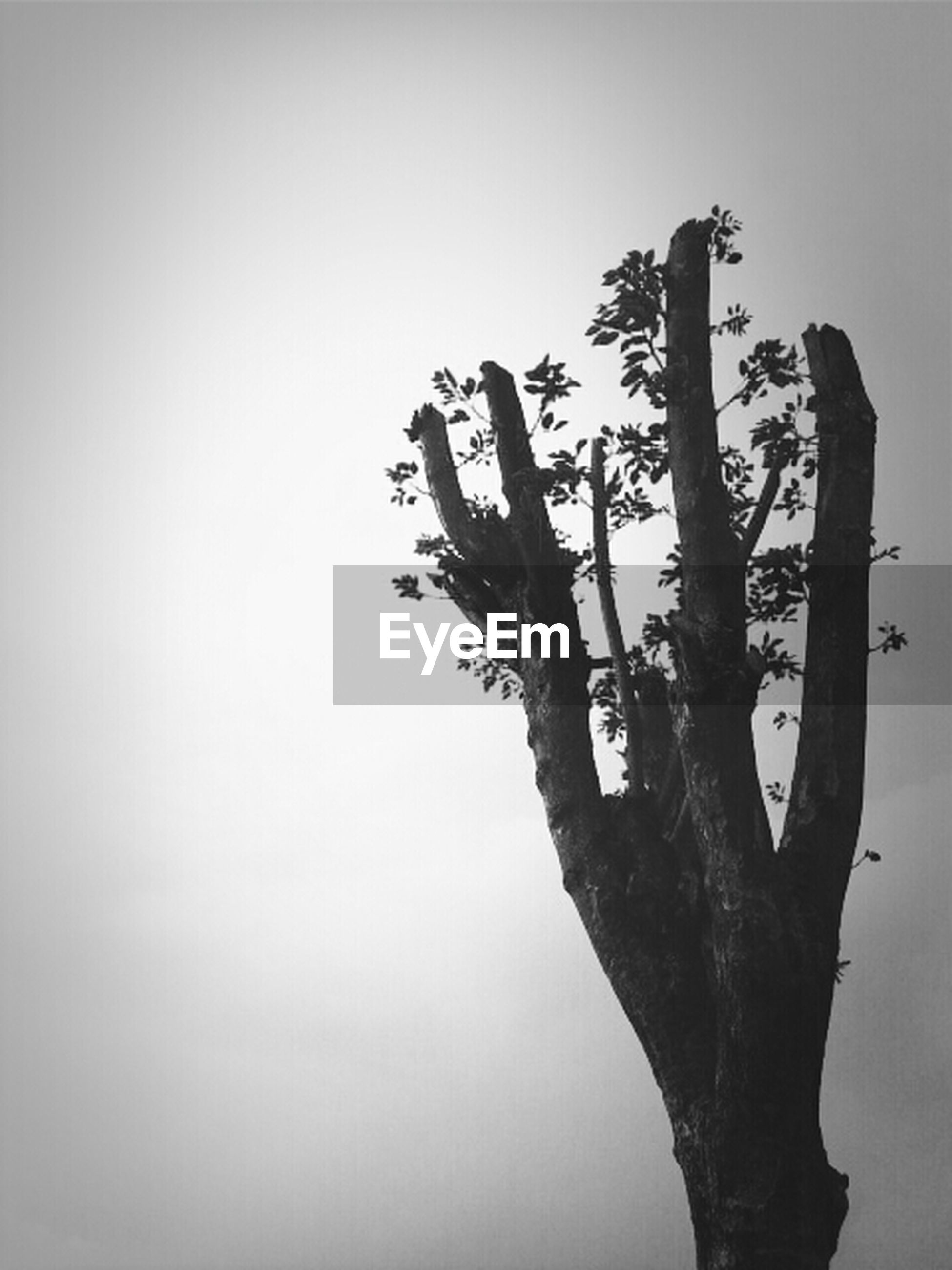 clear sky, copy space, branch, bare tree, tranquility, nature, tree, low angle view, beauty in nature, tranquil scene, single tree, tree trunk, scenics, no people, sky, silhouette, dead plant, growth, outdoors, day