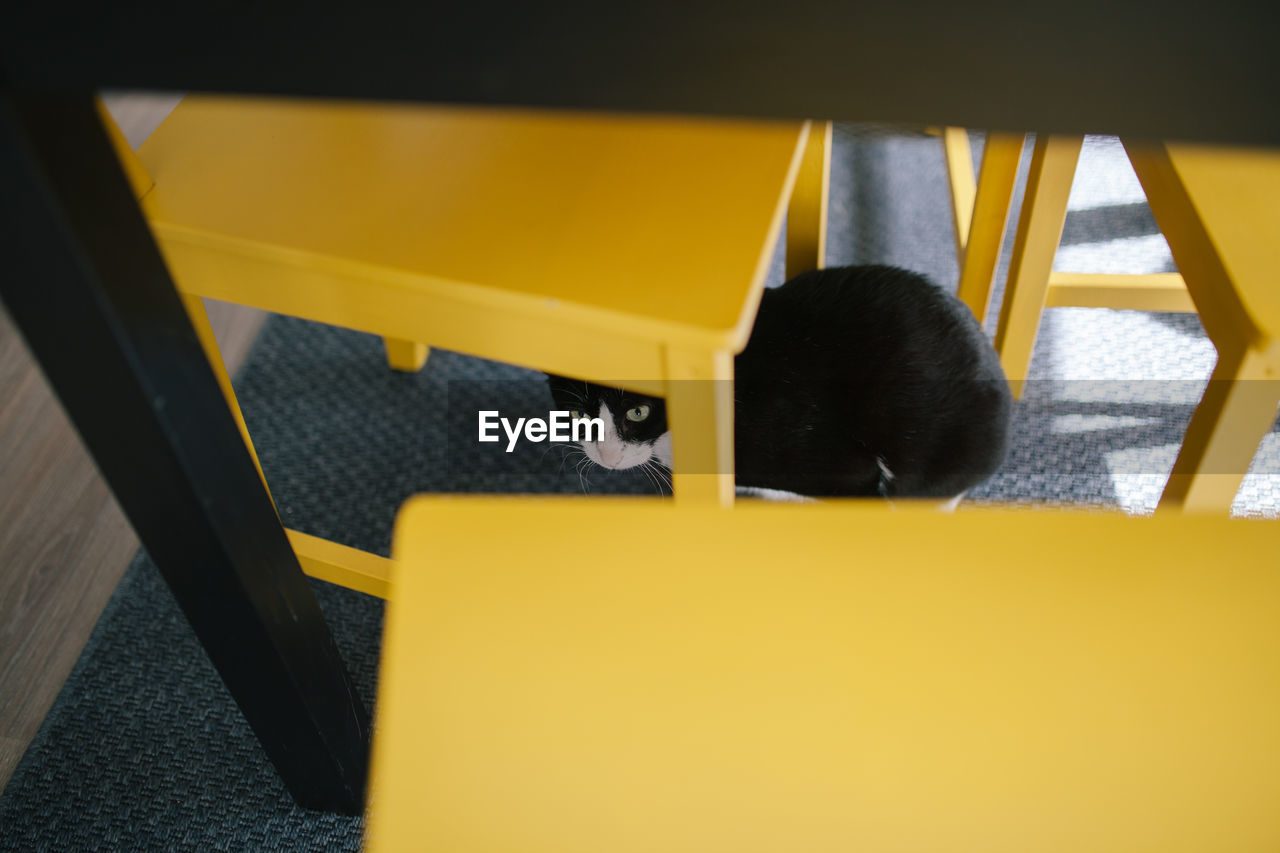 yellow, indoors, high angle view, portrait, seat, one person, day, real people, table, headshot, focus on background, black color, close-up, chair, selective focus, leisure activity
