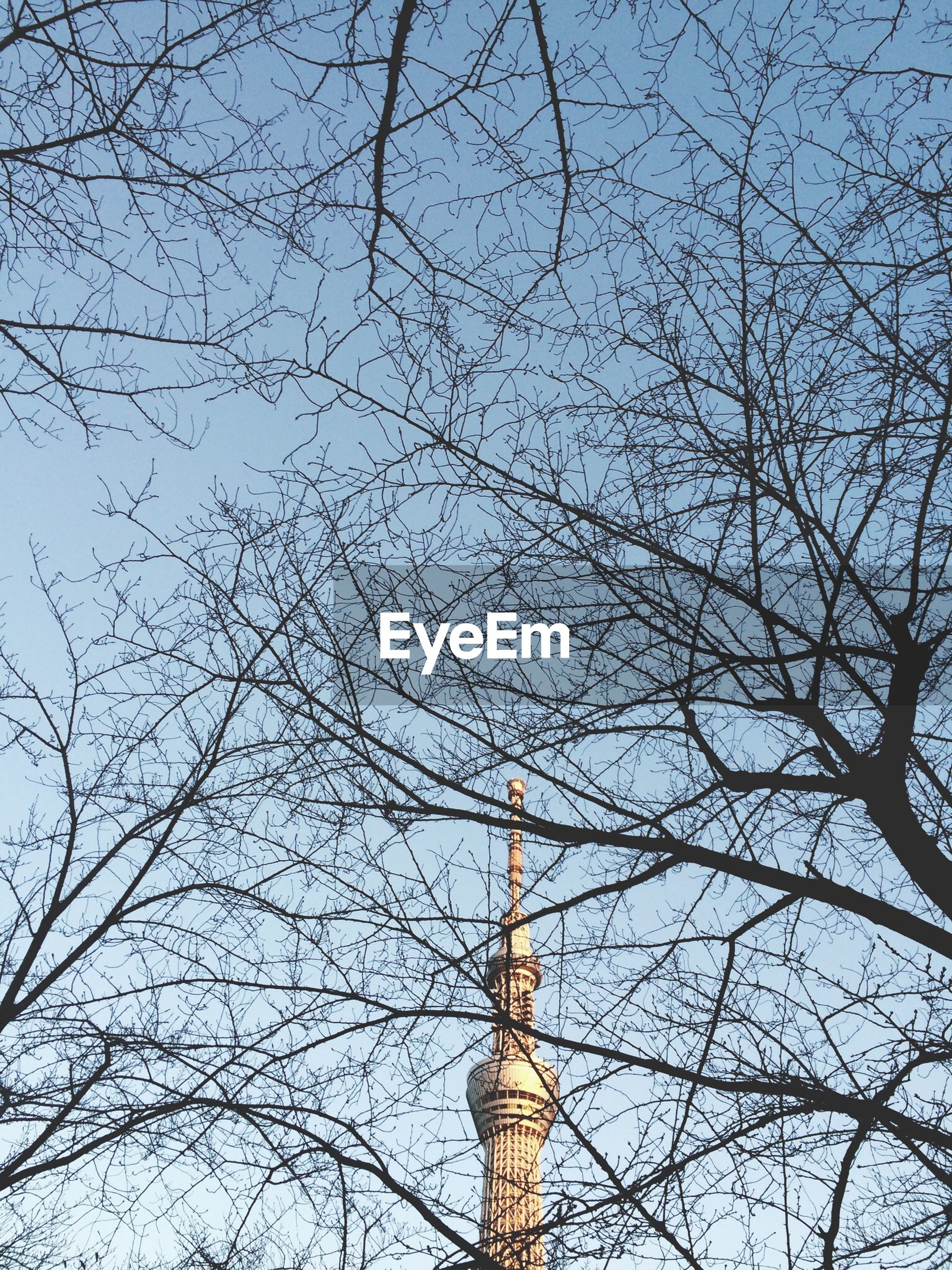 Low angle view of tokyo sky tree seen through bare tree