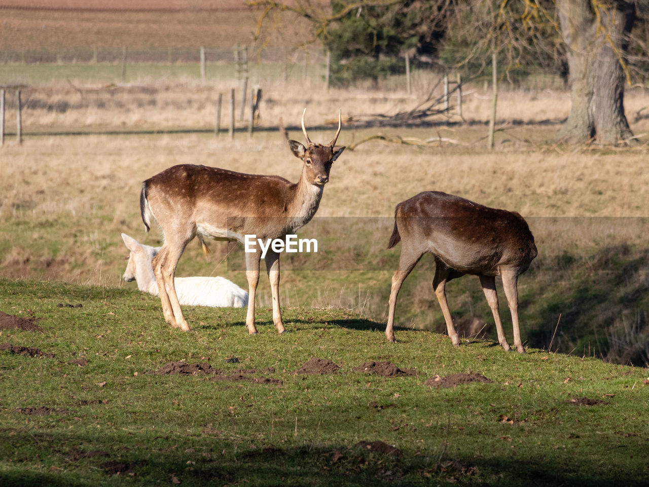 animal wildlife, animal themes, animal, animals in the wild, group of animals, grass, mammal, plant, land, no people, standing, field, deer, nature, environment, full length, day, two animals, vertebrate, outdoors, herbivorous