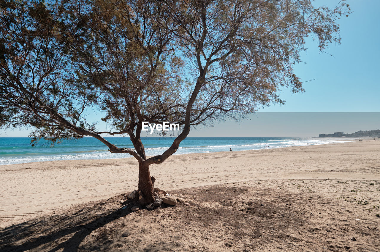 water, land, tree, sky, beach, sea, beauty in nature, scenics - nature, nature, tranquility, plant, tranquil scene, sand, day, horizon, horizon over water, bare tree, branch, no people, outdoors, dead plant, driftwood