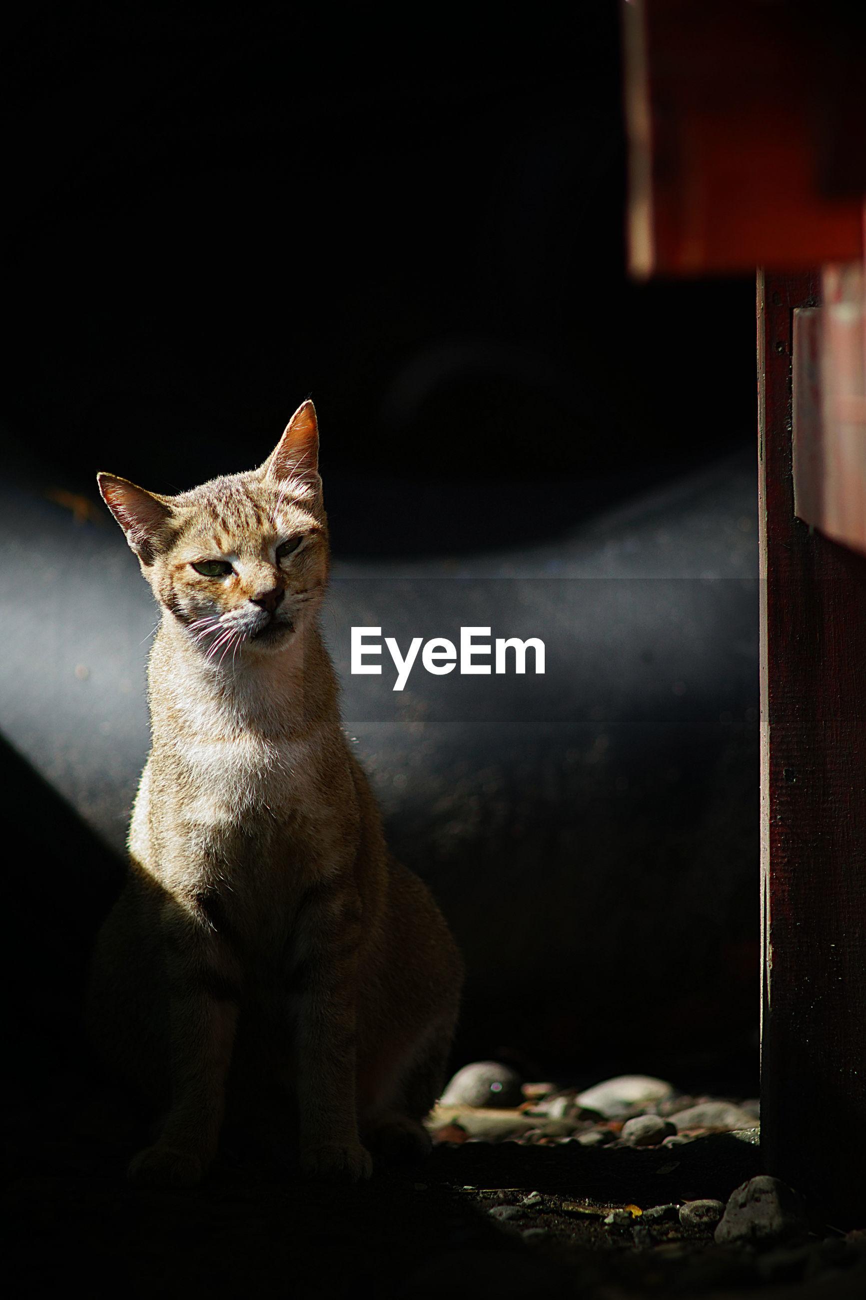 CLOSE-UP OF CAT SITTING