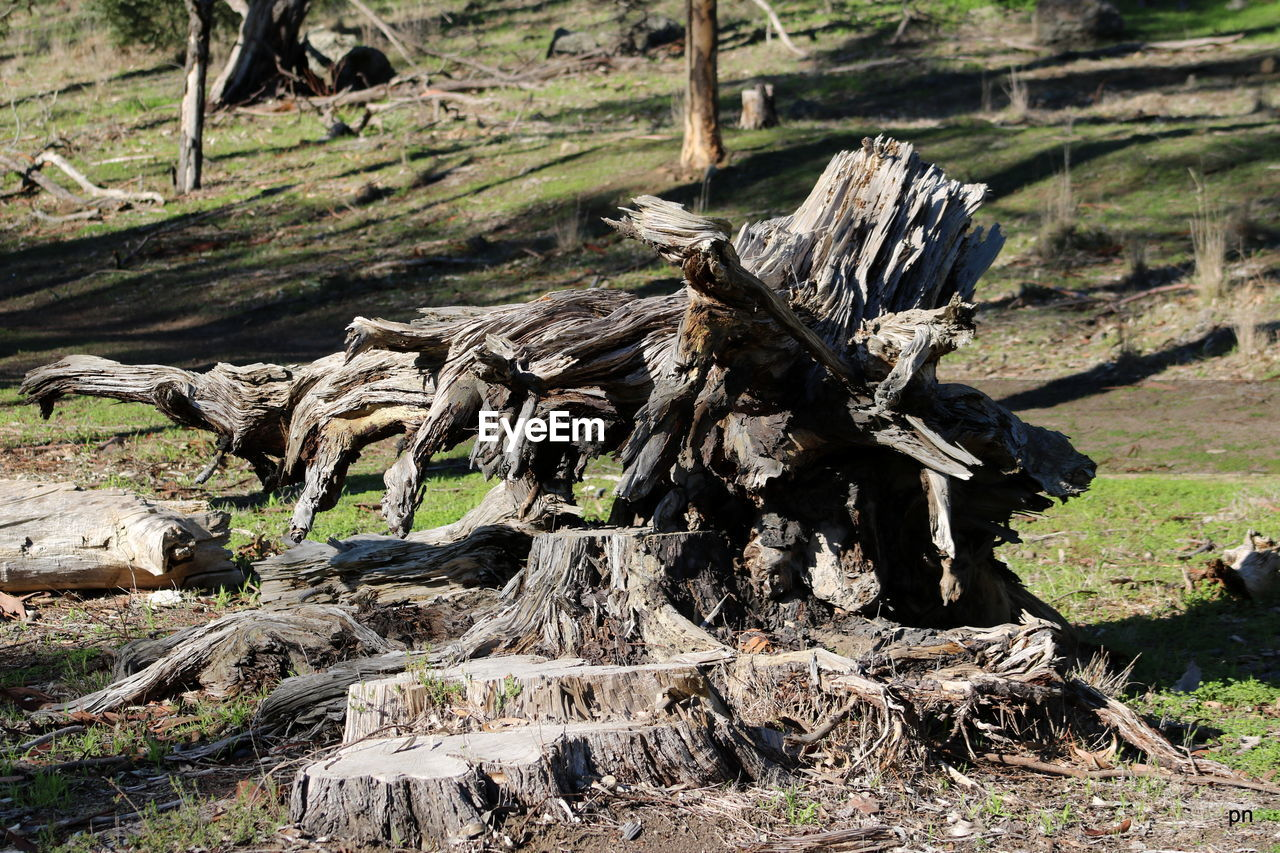 nature, day, wood - material, no people, tree, tree stump, field, outdoors, tranquility, stack, tree trunk, dead tree, close-up, beauty in nature