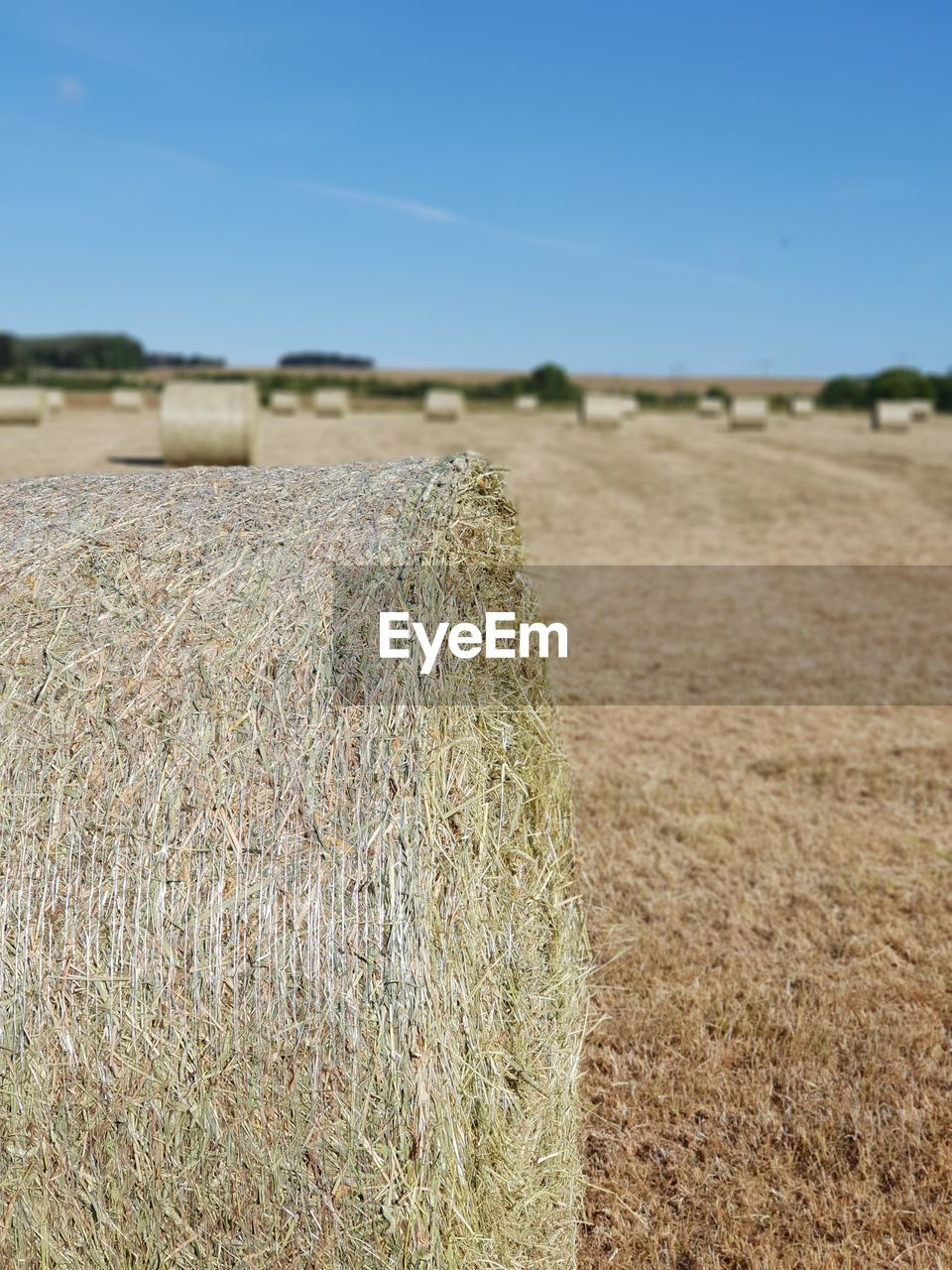 landscape, hay, agriculture, land, rural scene, field, sky, farm, plant, environment, nature, bale, day, focus on foreground, tranquility, harvesting, tranquil scene, no people, outdoors, scenics - nature
